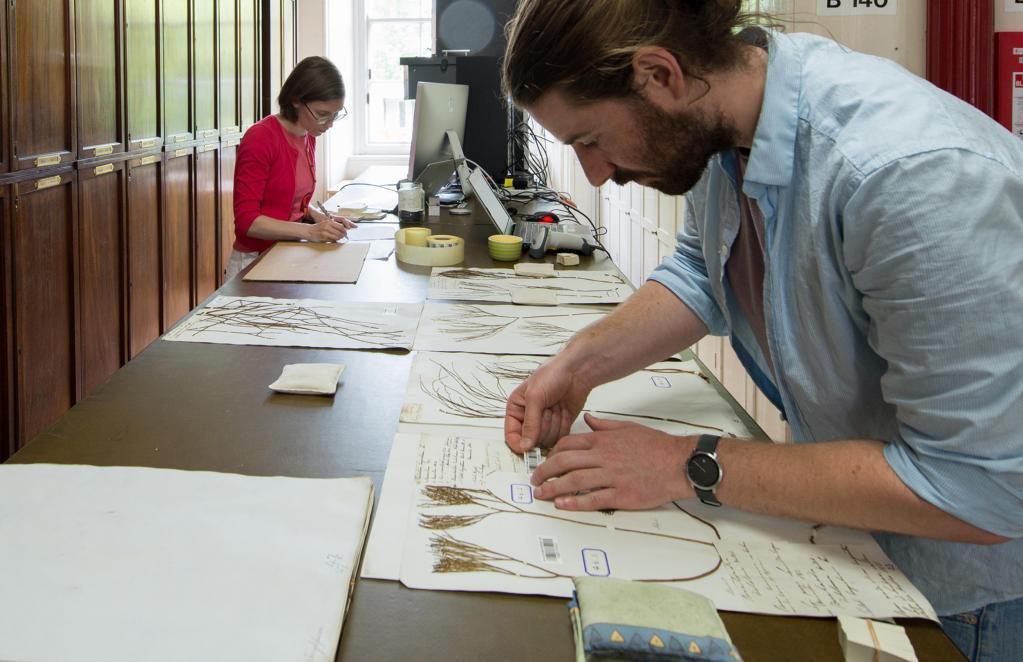 Herbarium Work