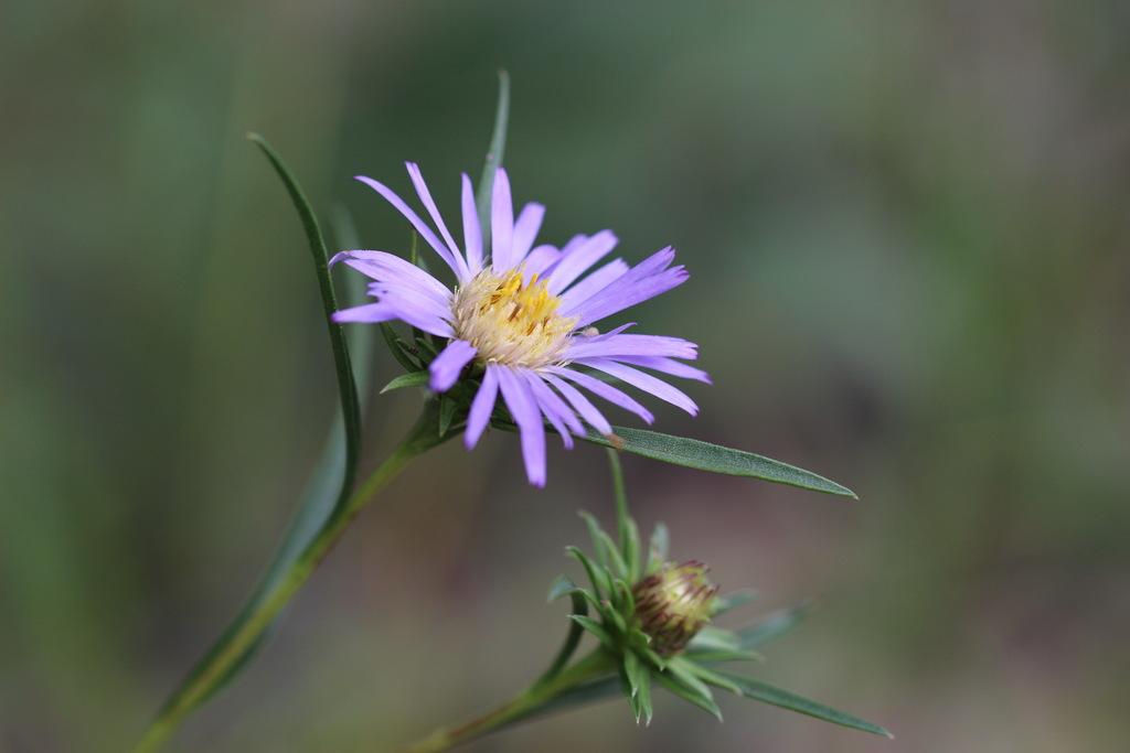 Know plants? -