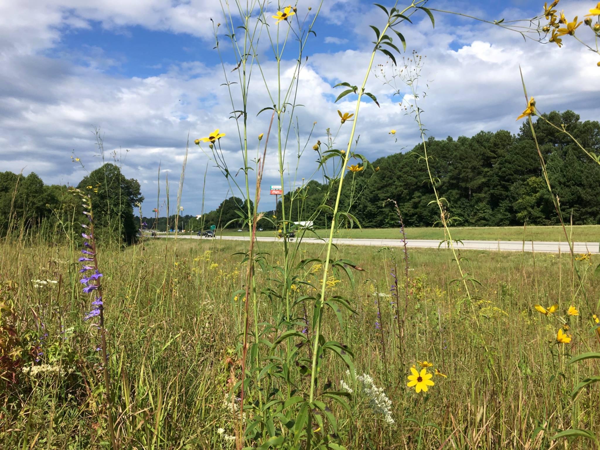 I40grassland.jpg