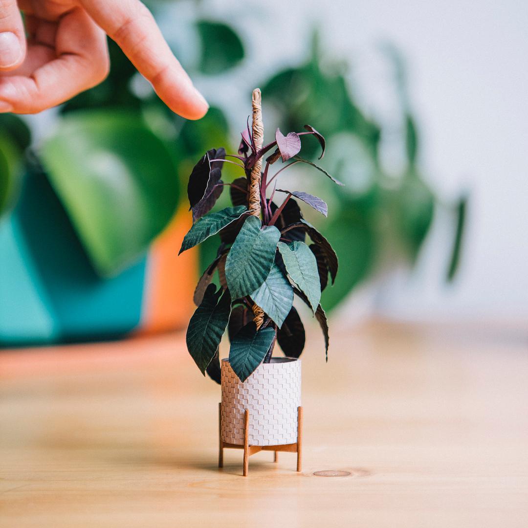 littlerayofsunflower 2.jpg