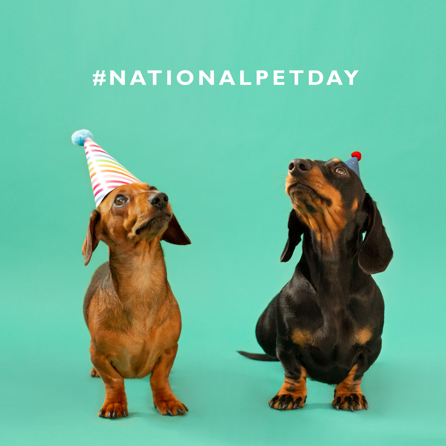 National-Pet-Day.jpg
