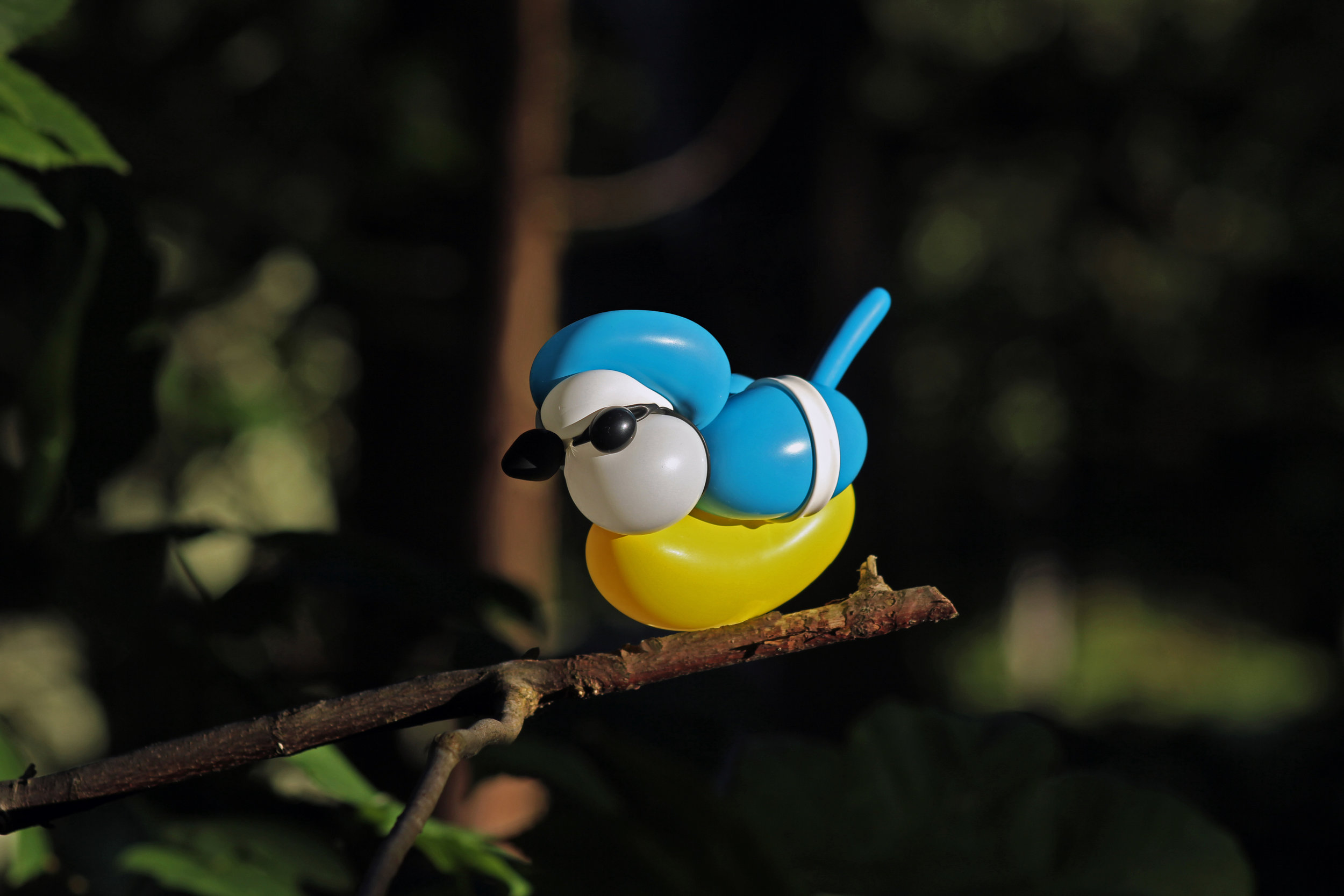 BlueTit.jpg
