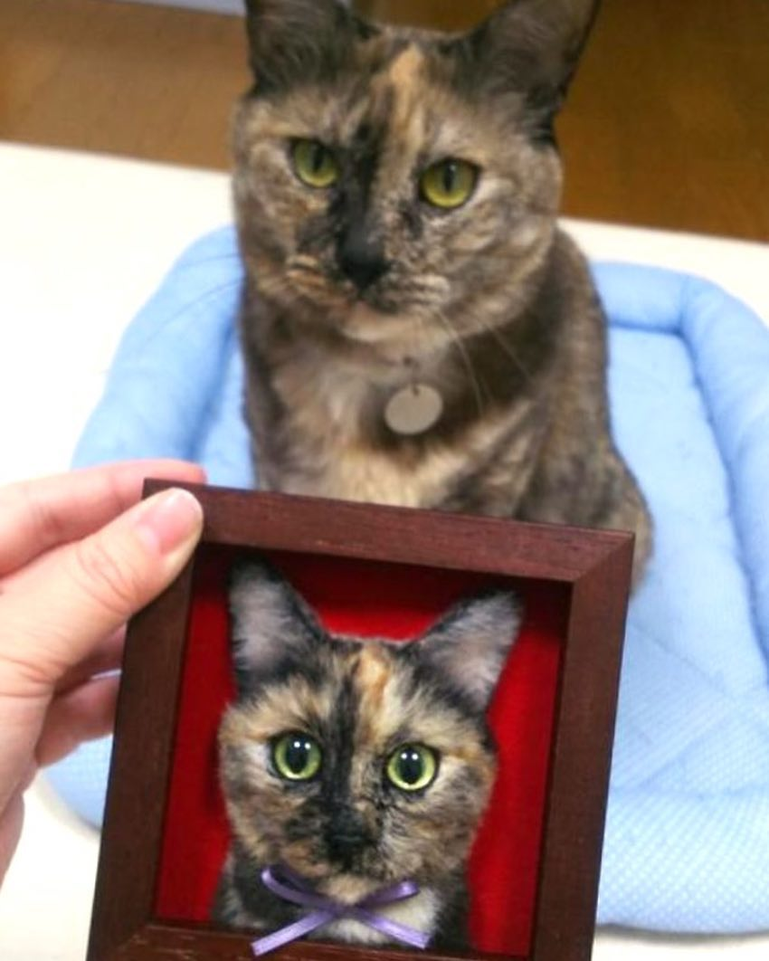 Cat portrait and the subject.jpg
