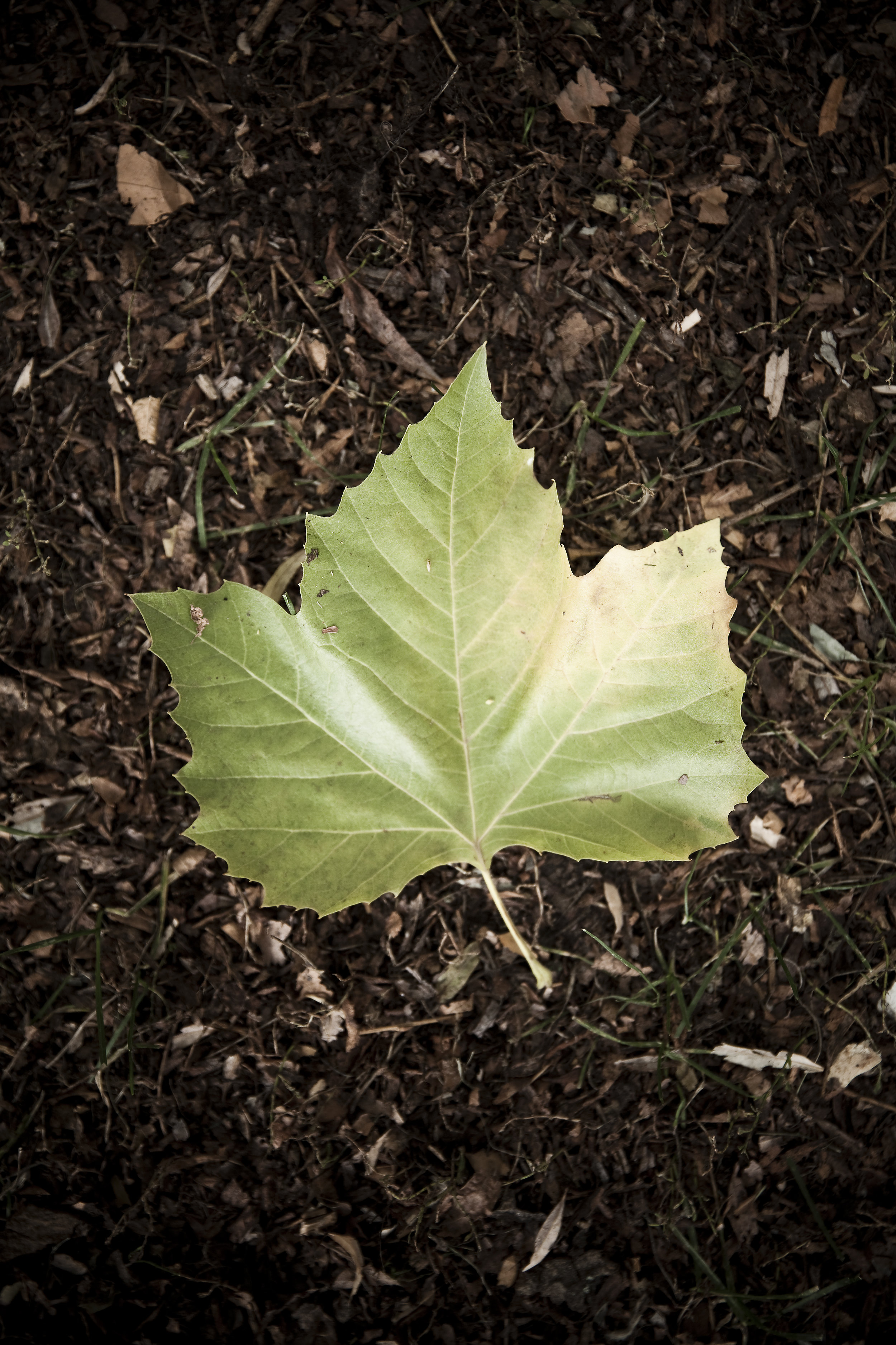 grønt blad.jpg