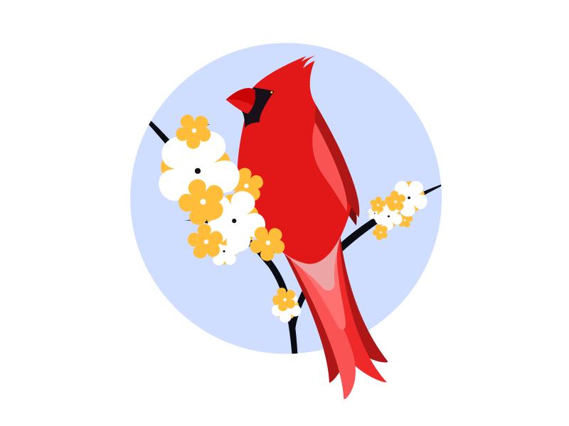 bird_cardinal.png