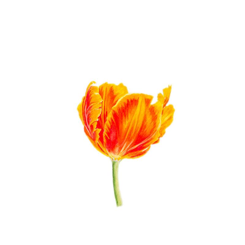 "Flower 8 Limited Edition Print, 2017 8 x 8"", 13 x 13"" framed"
