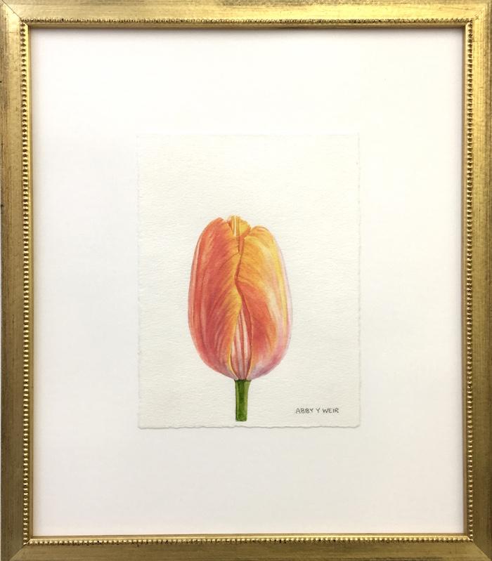 "Tulip 1  Original Watercolor, 2017  6 x 8"", 13 x 15 1/2"" framed"