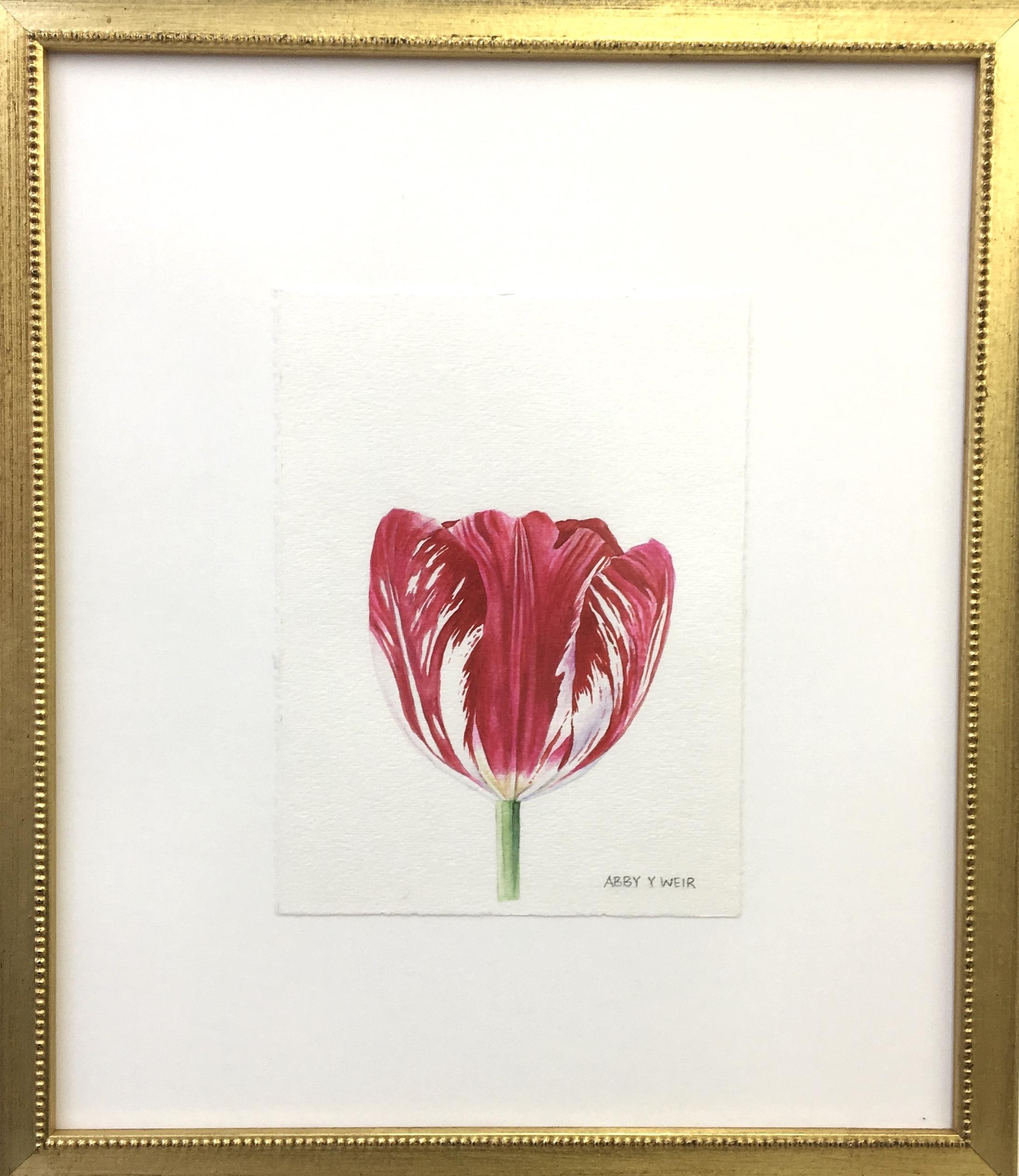 "Tulip 4 Original Watercolor, 2017  6 x 8"", 13 x 15 1/2"" framed"