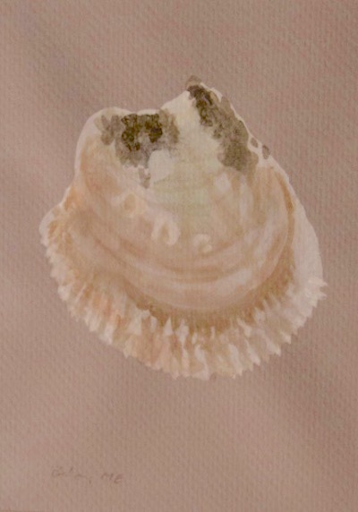 oyster 11 crop.jpg