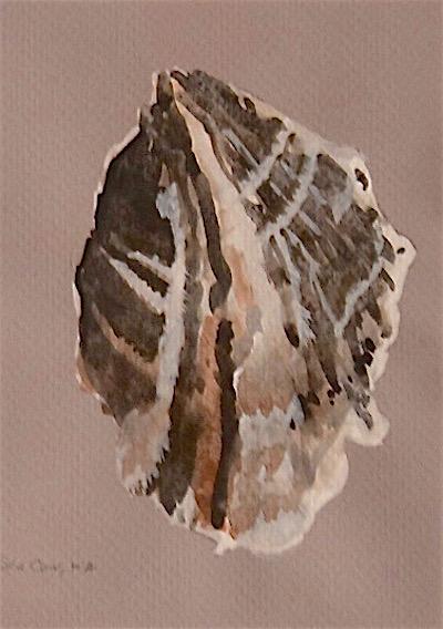 oyster 12 crop.jpg