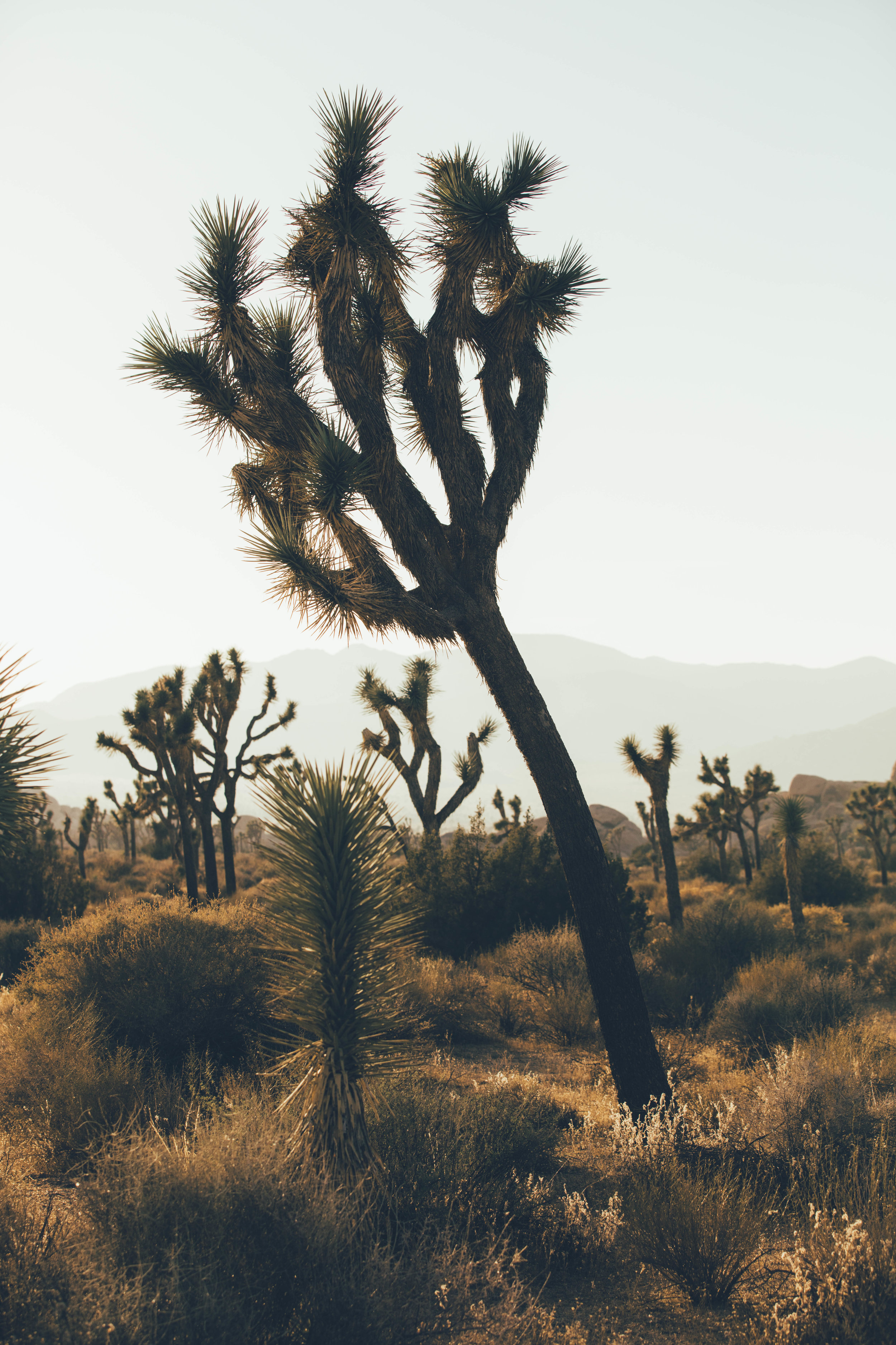 joshua tree james glacier photography-26.jpg