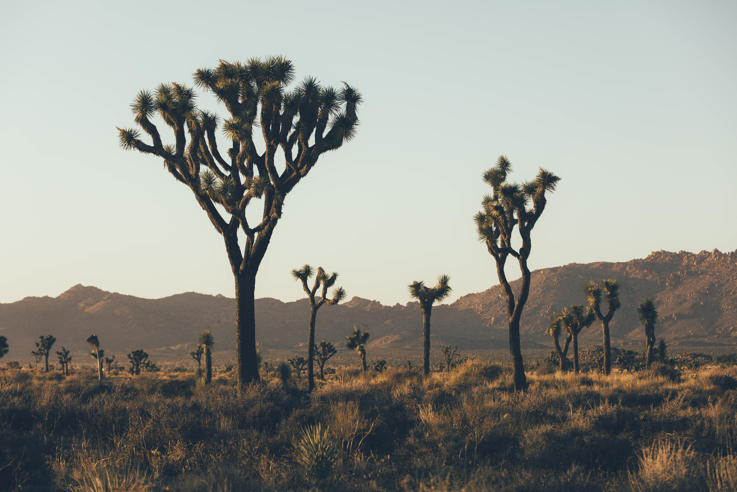 joshua tree james glacier photography-25.jpg