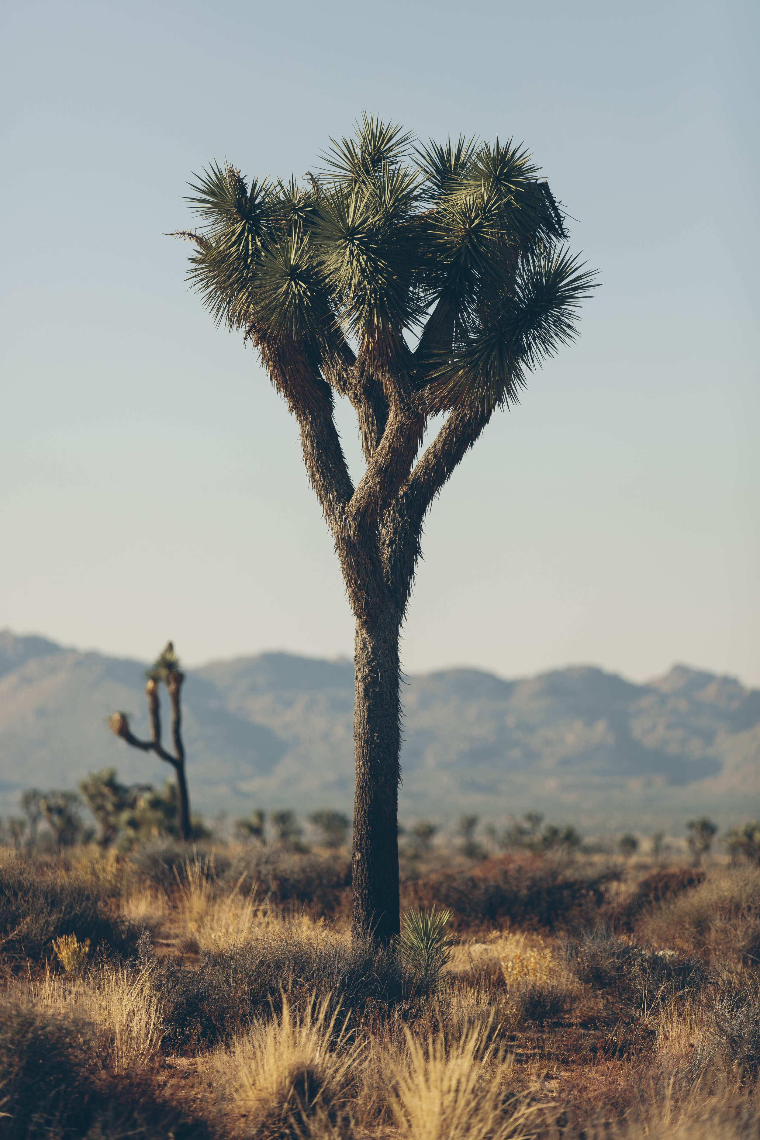 joshua tree james glacier photography-24.jpg