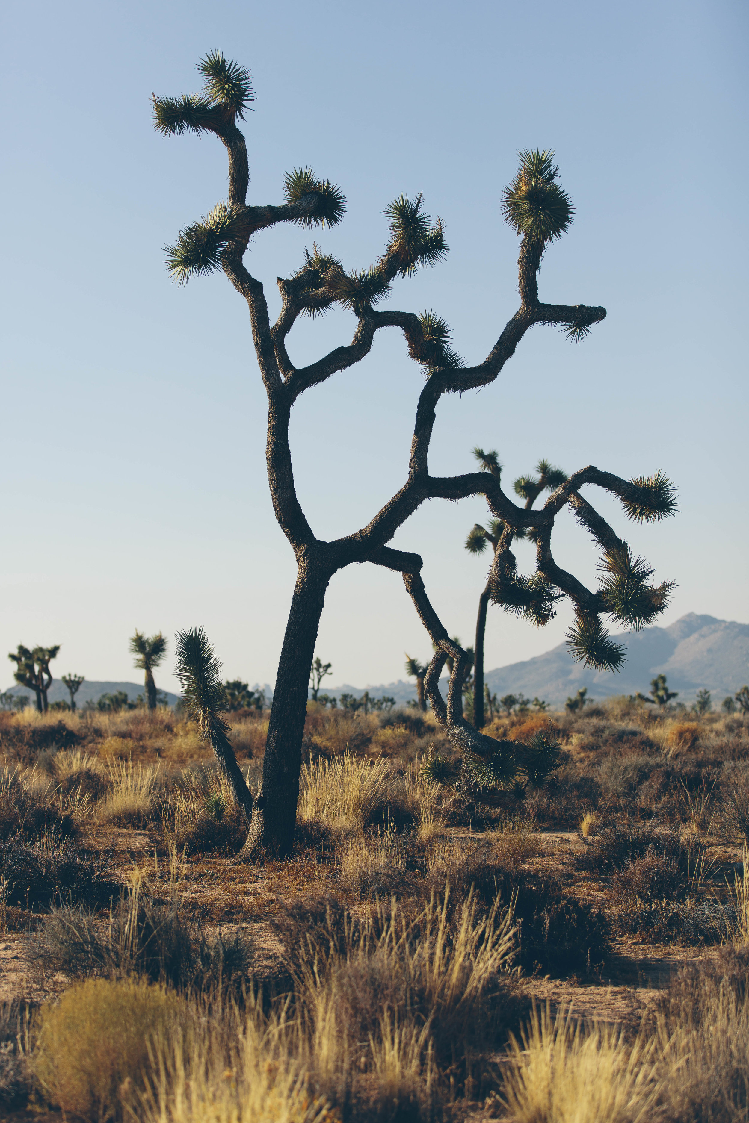 joshua tree james glacier photography-20.jpg