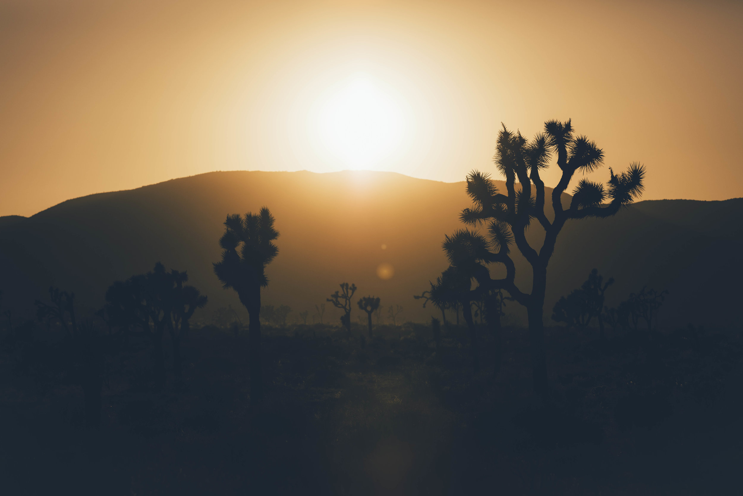 joshua tree james glacier photography-12.jpg