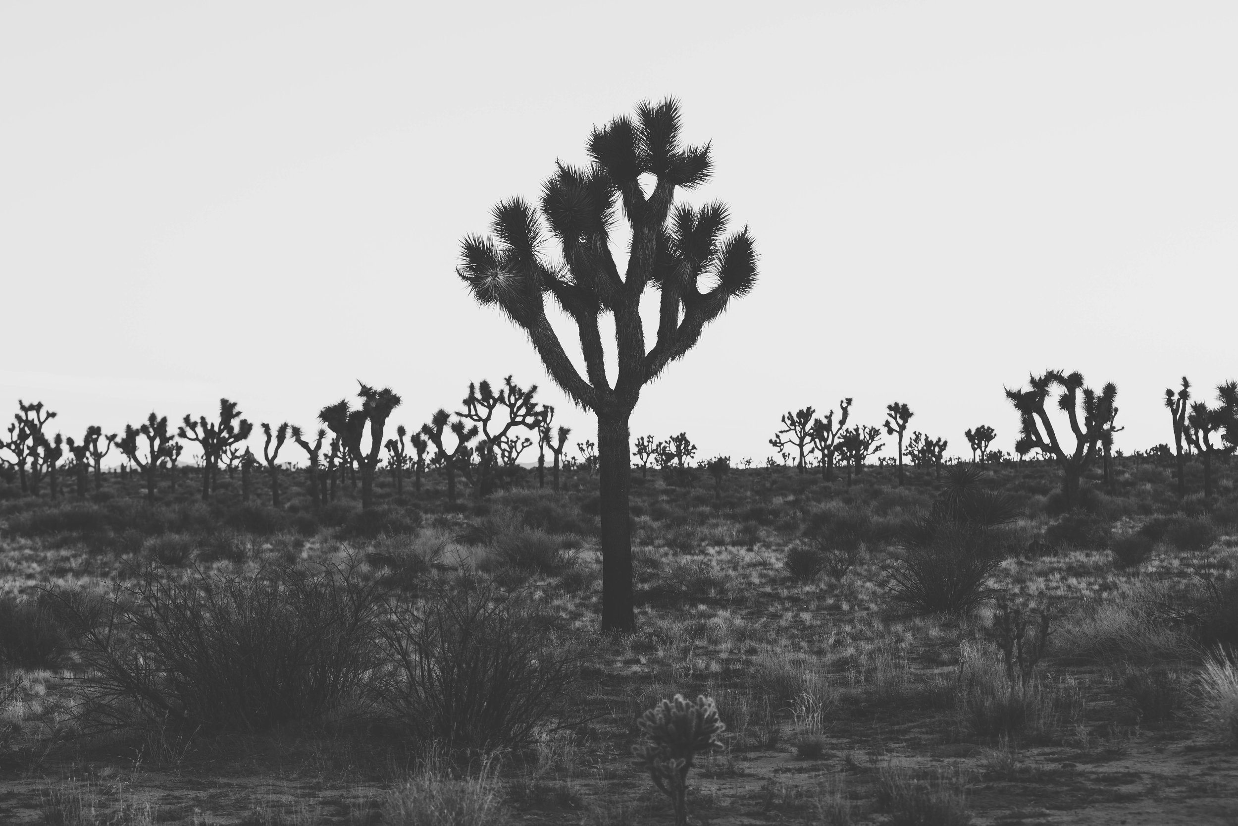 joshua tree james glacier photography-11.jpg