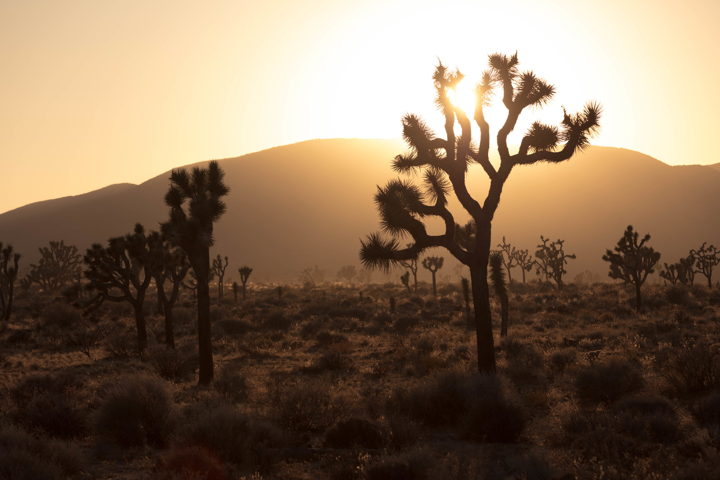 joshua tree james glacier photography-10.jpg
