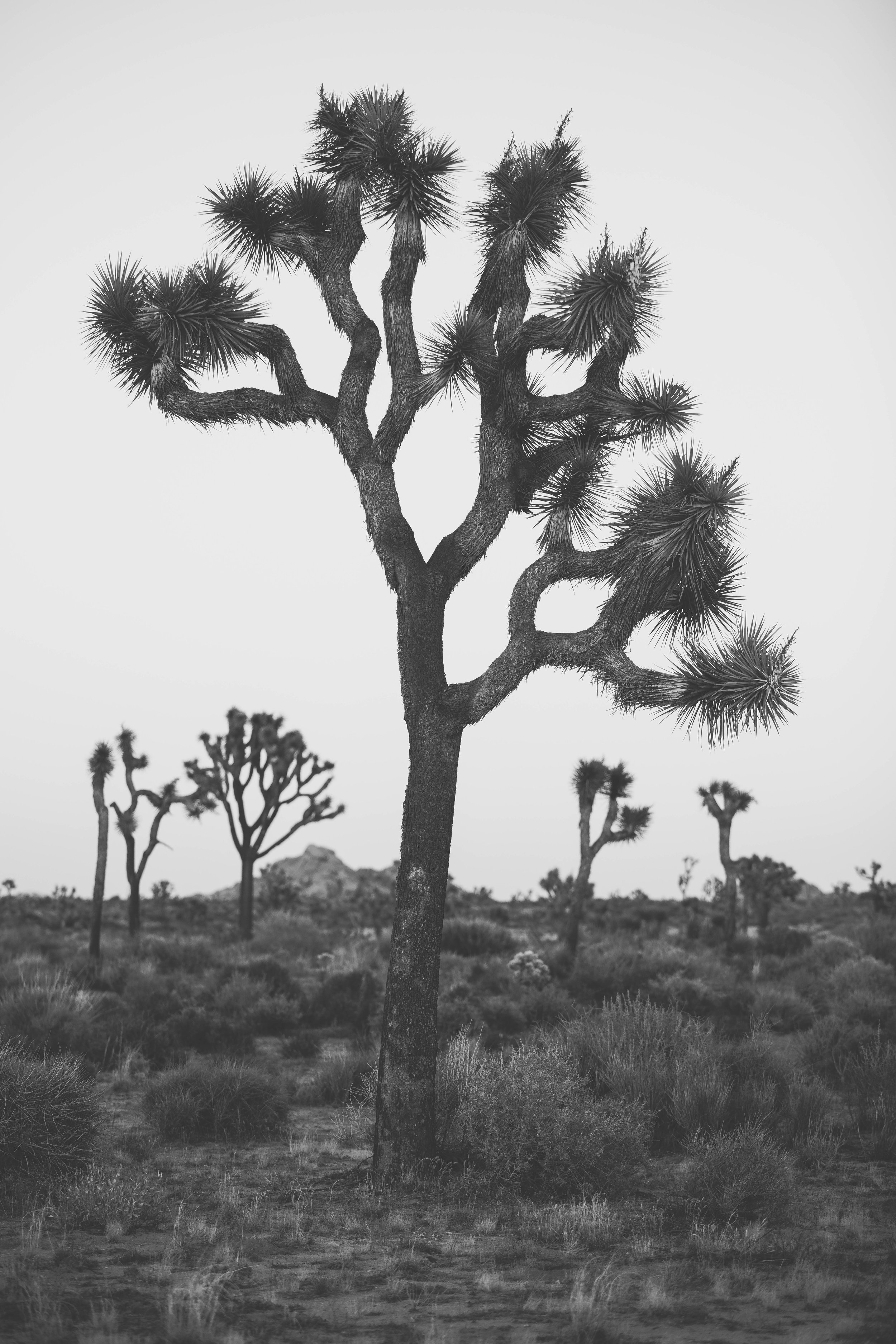 joshua tree james glacier photography-8.jpg