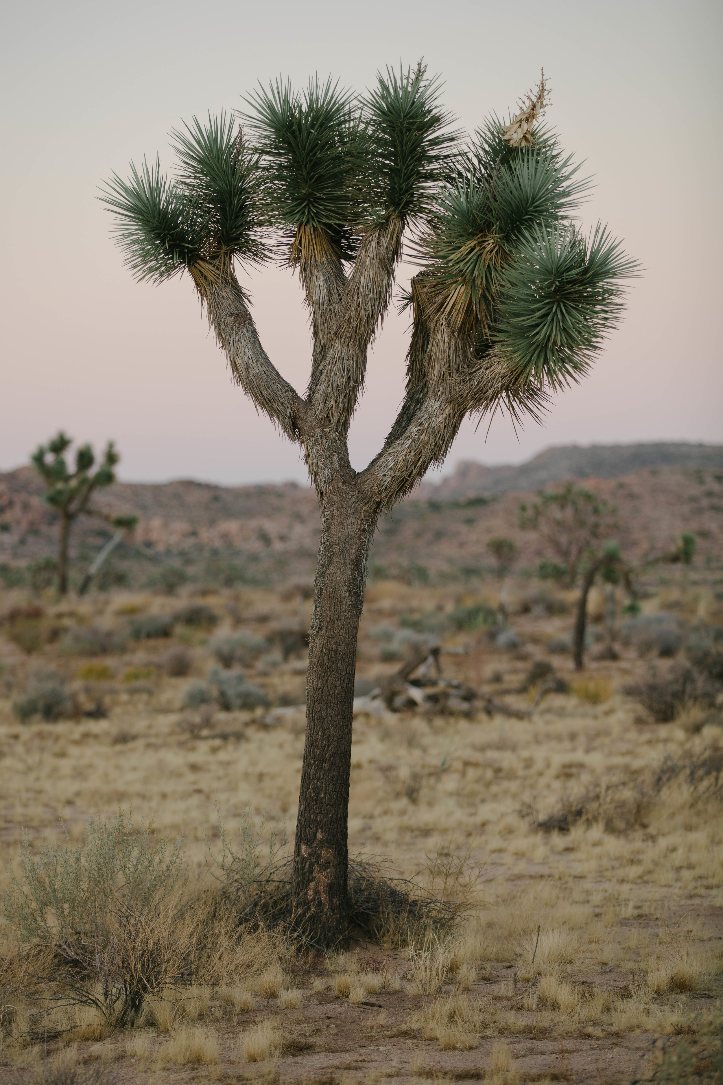 joshua tree james glacier photography-9.jpg