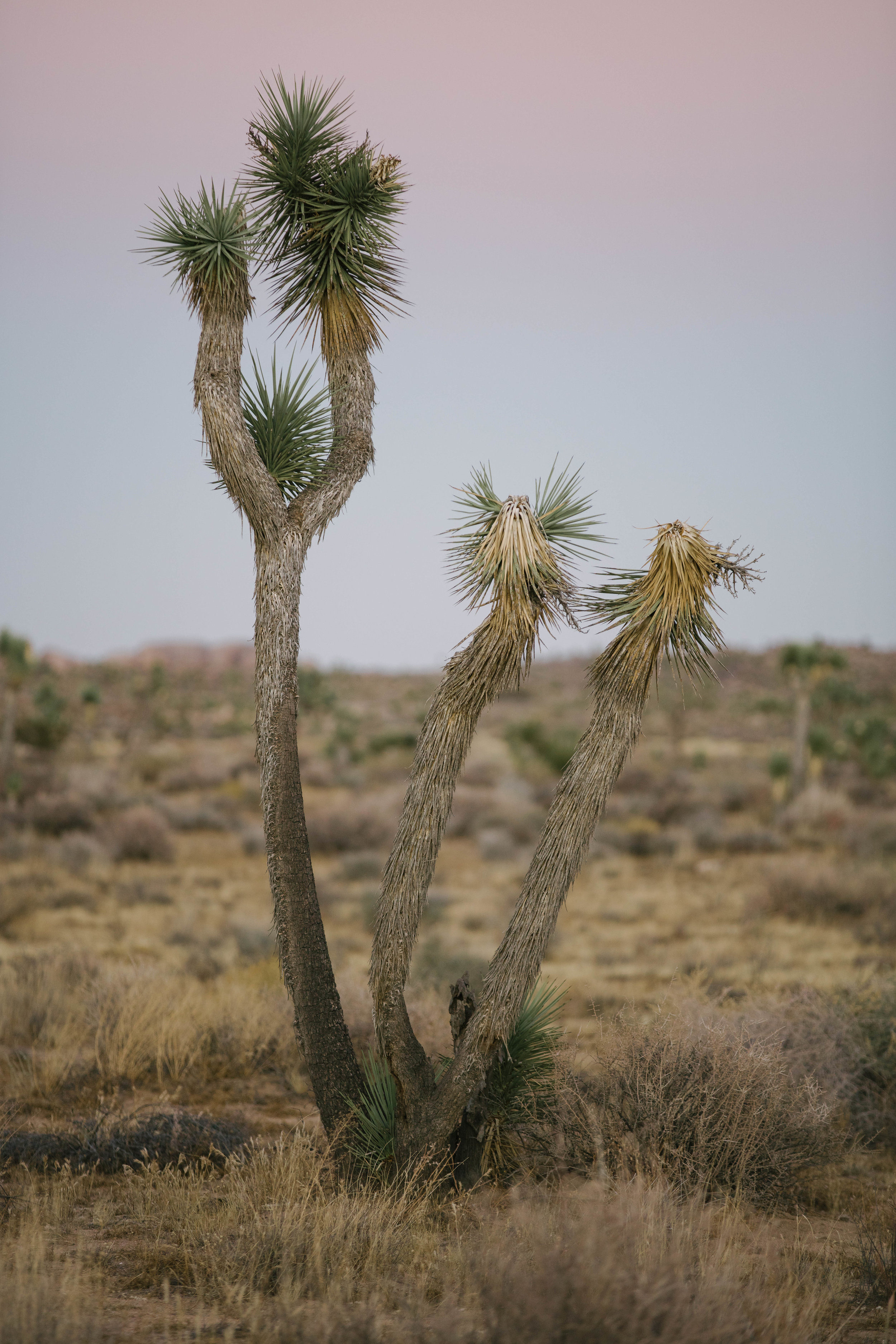 joshua tree james glacier photography-7.jpg