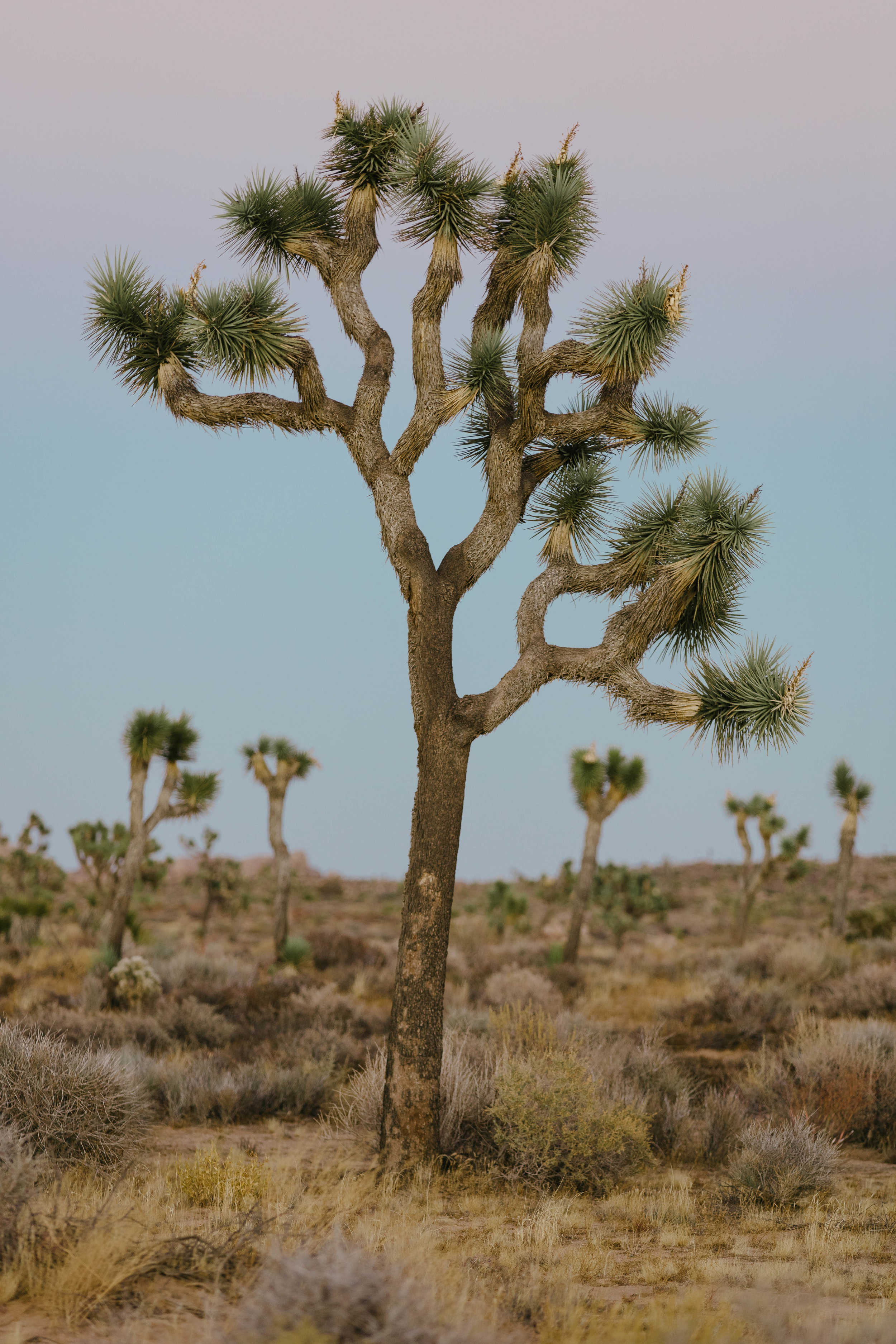 joshua tree james glacier photography-6.jpg