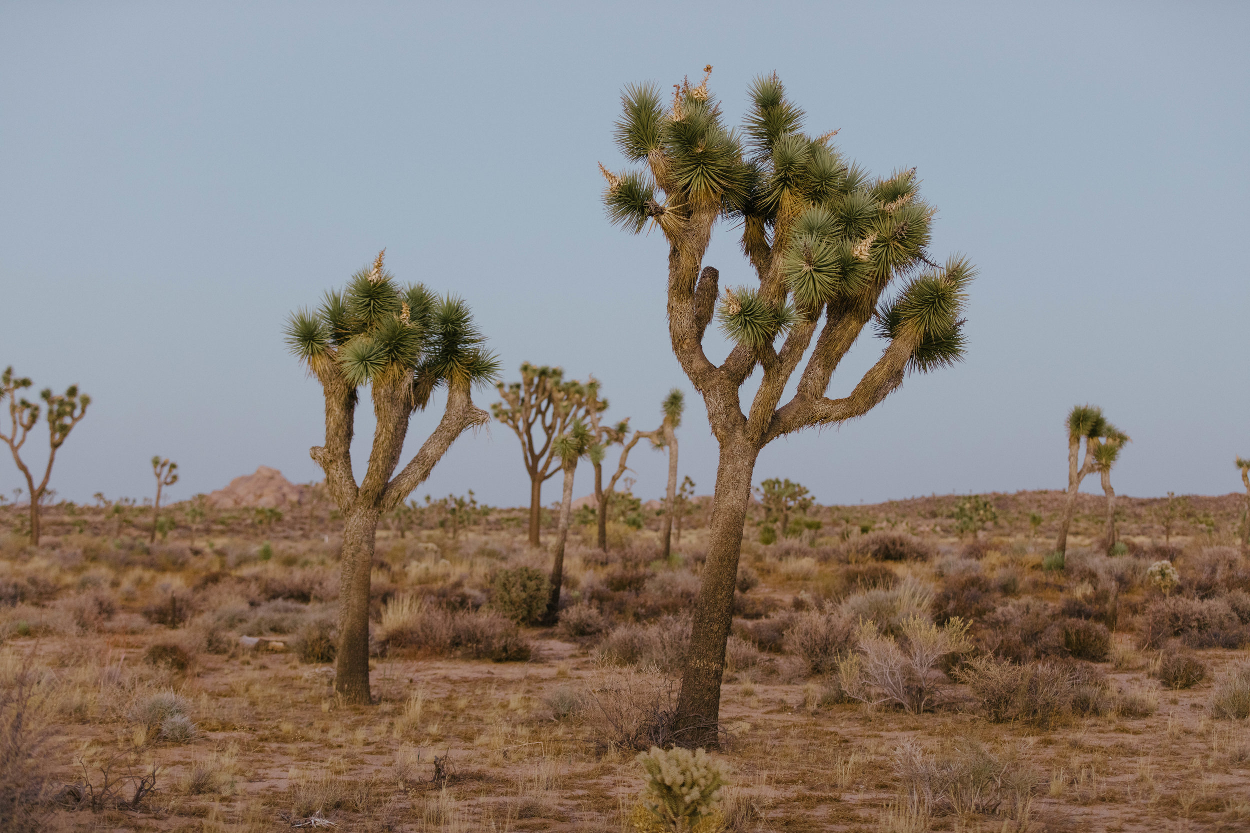 joshua tree james glacier photography-5.jpg