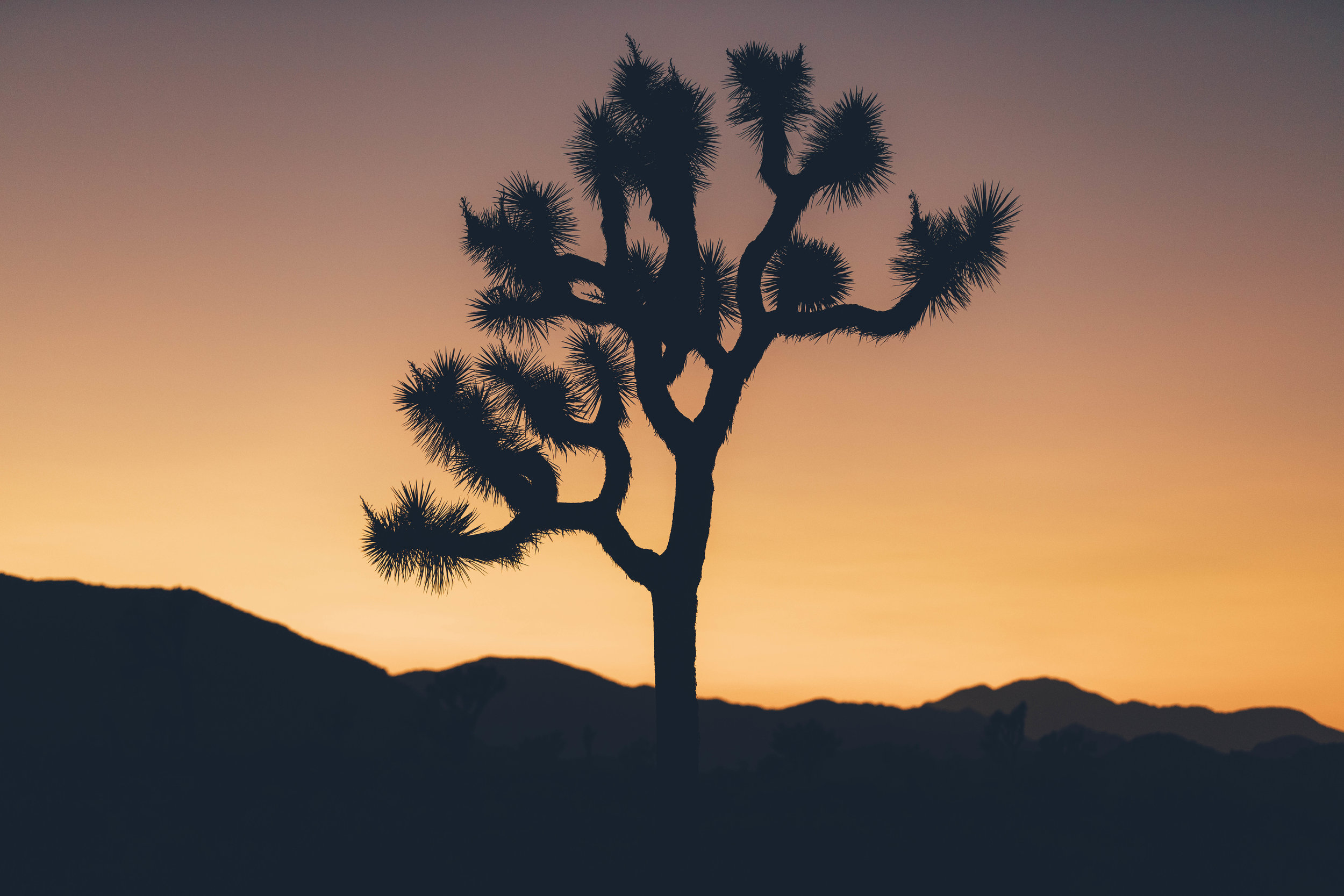 joshua tree james glacier photography-2.jpg