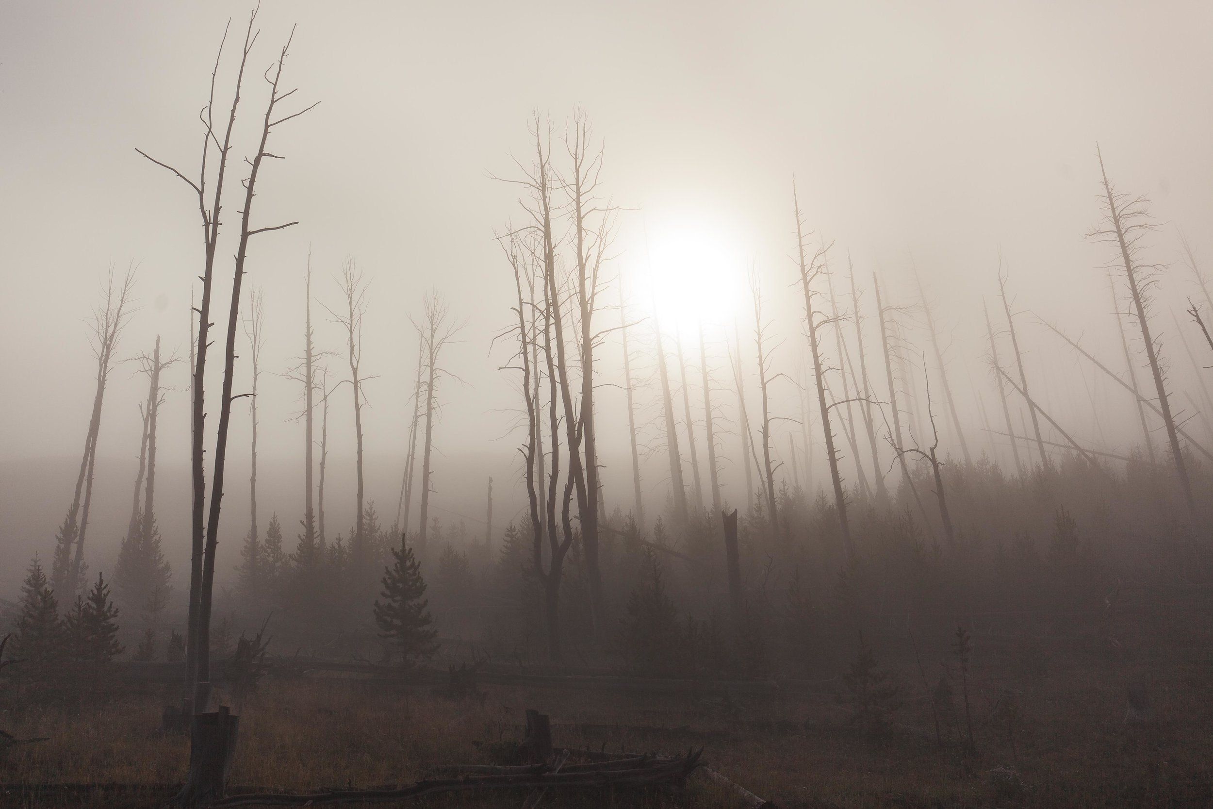 Yellowstone 2018 VSCO james glacier-14.jpg