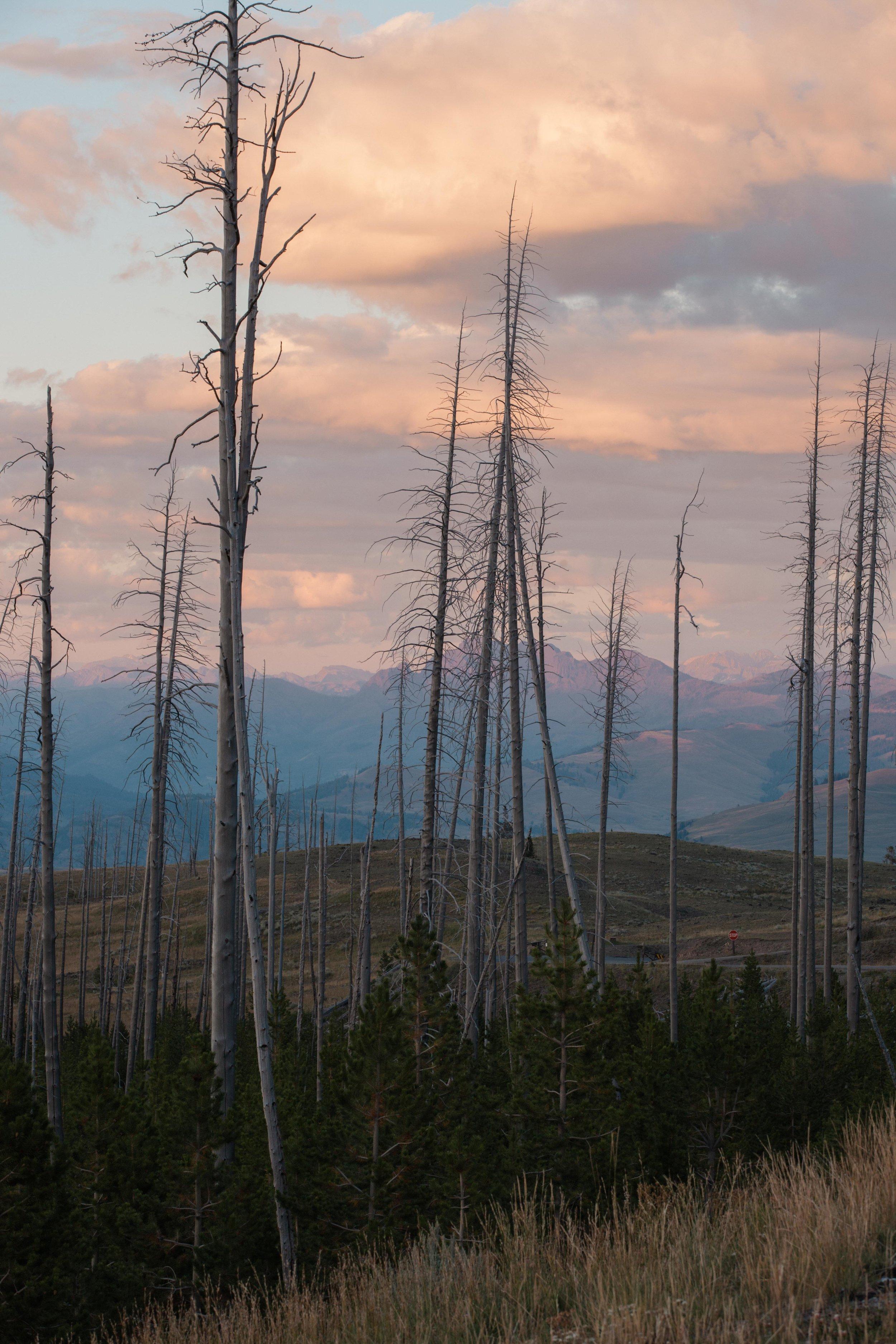 Yellowstone 2018 VSCO james glacier-26.jpg
