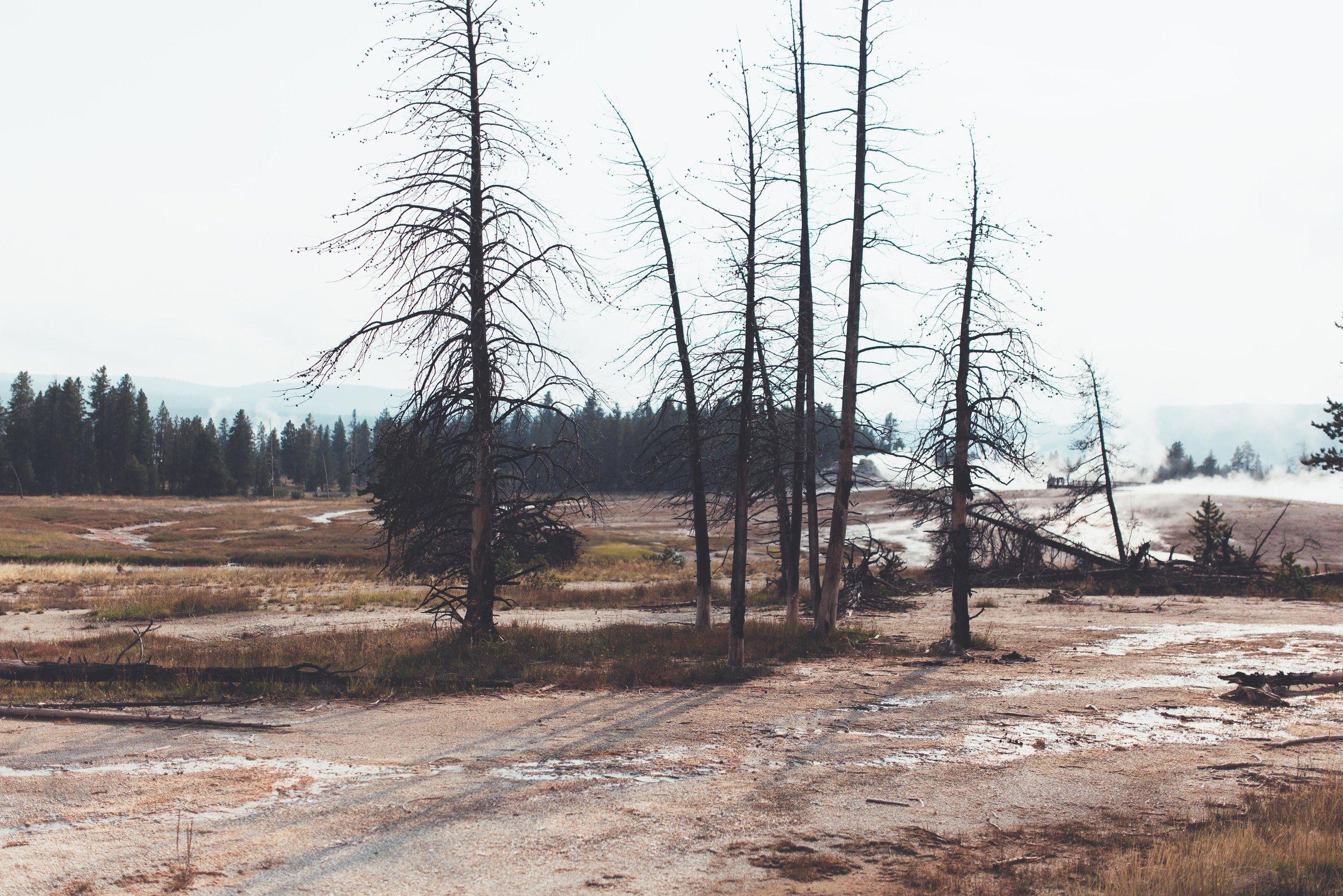 Yellowstone 2018 VSCO james glacier-39.jpg