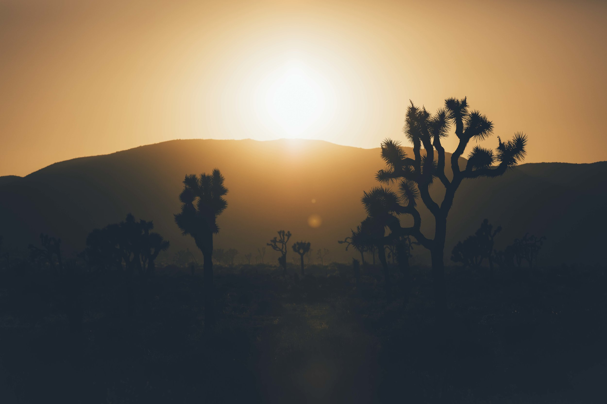 Joshua Tree | California - An alien landscape deep in the Mojave Desert