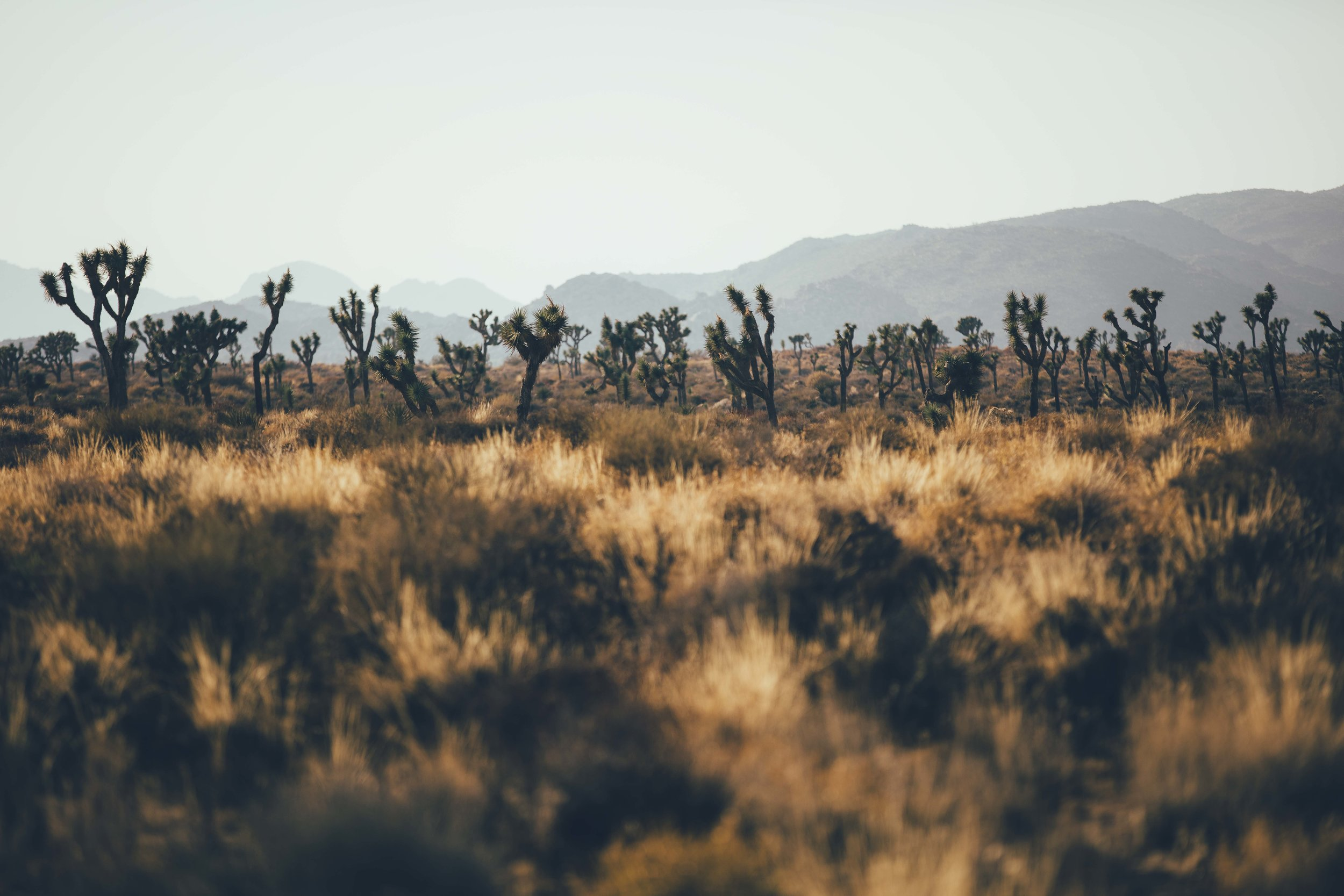 Joshua Tree James Glacier Photography 2018-1.jpg