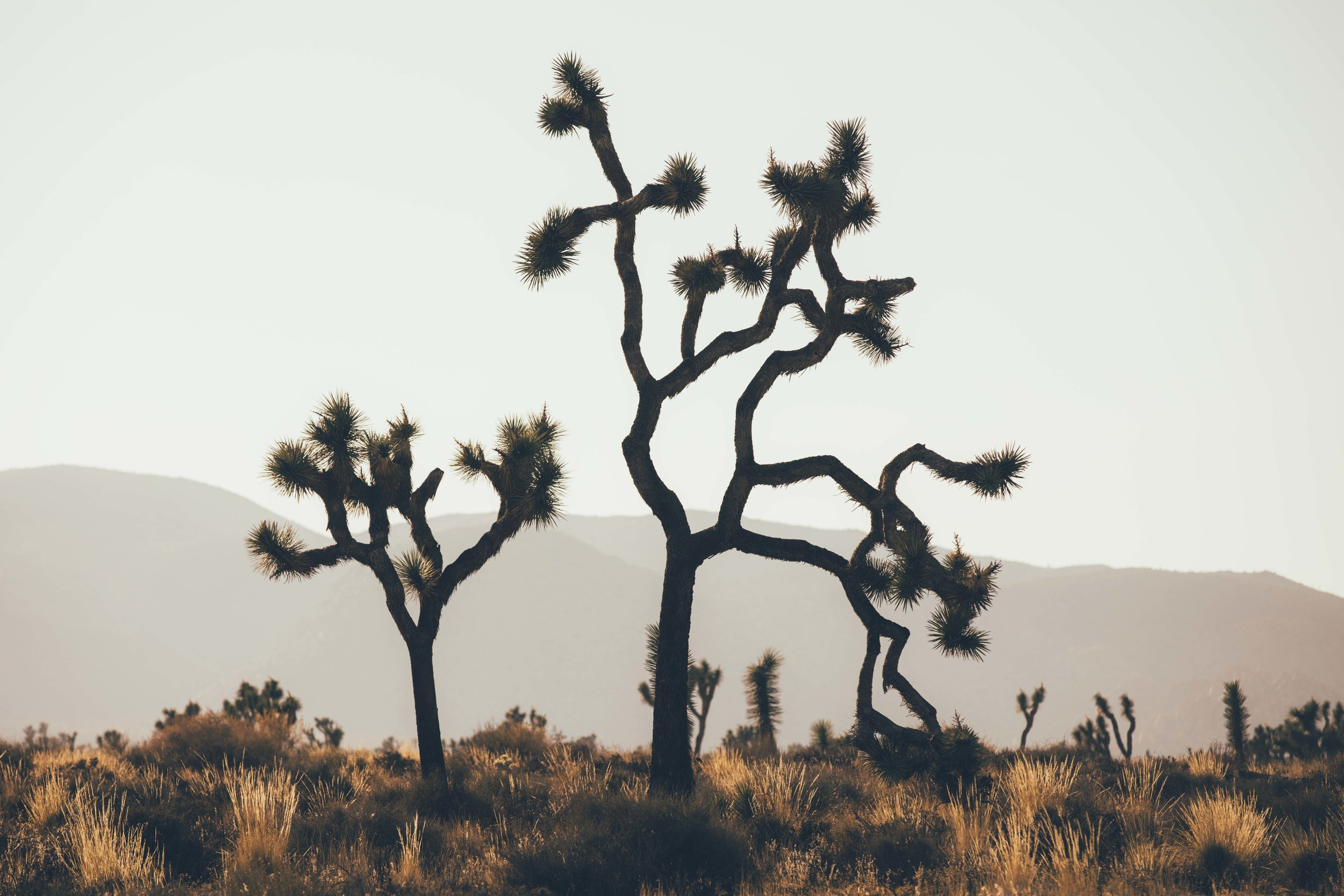 Joshua Tree James Glacier Photography 2018-4.jpg