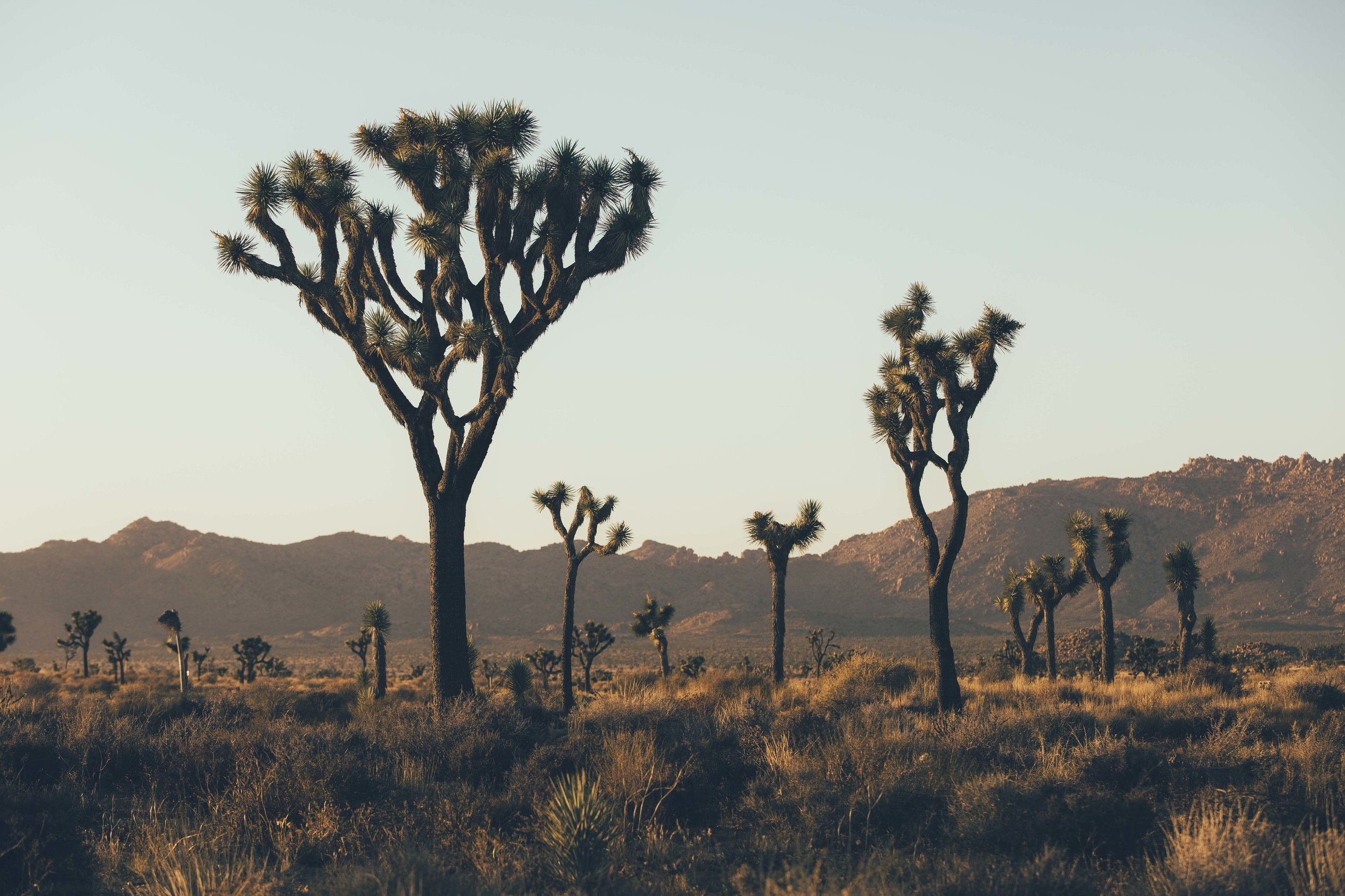 Joshua Tree James Glacier Photography 2018-6.jpg