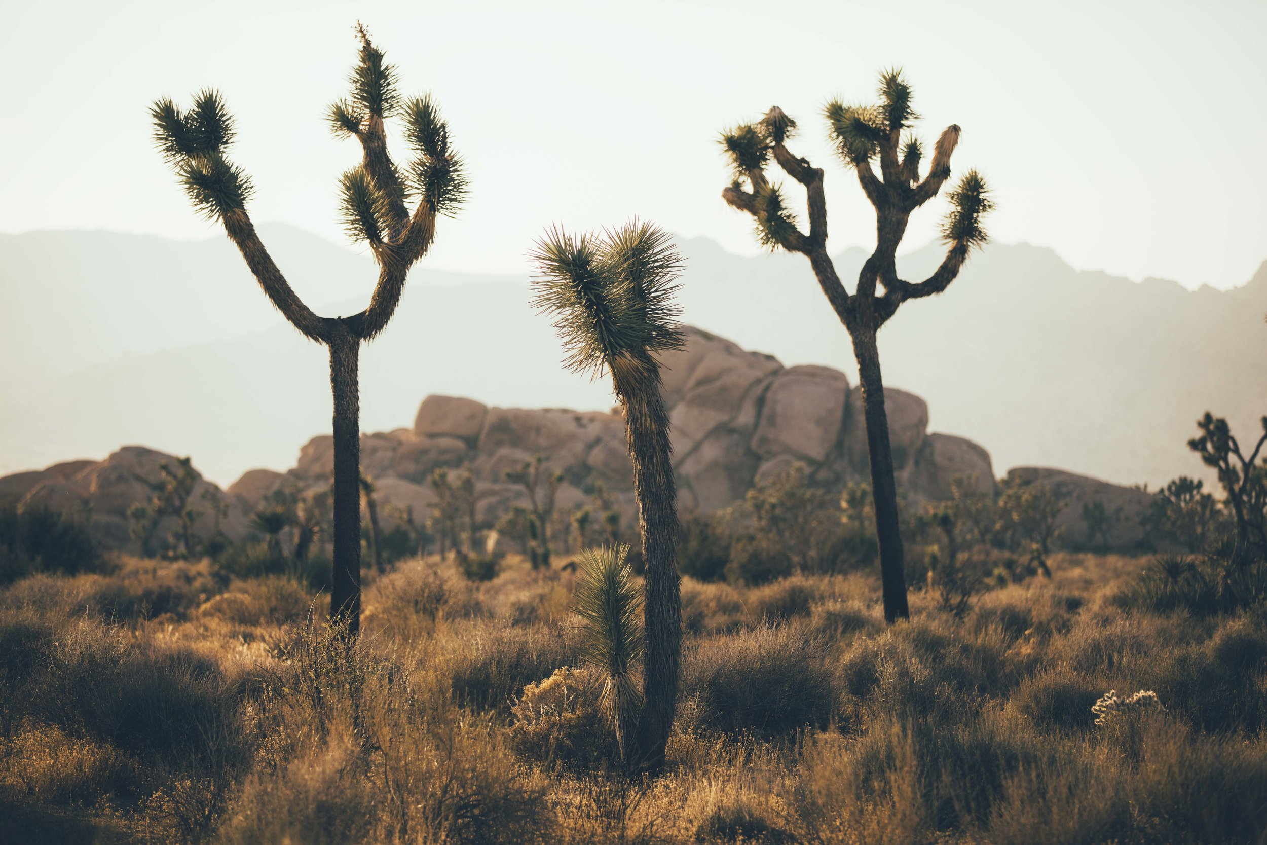 Joshua Tree James Glacier Photography 2018-7.jpg