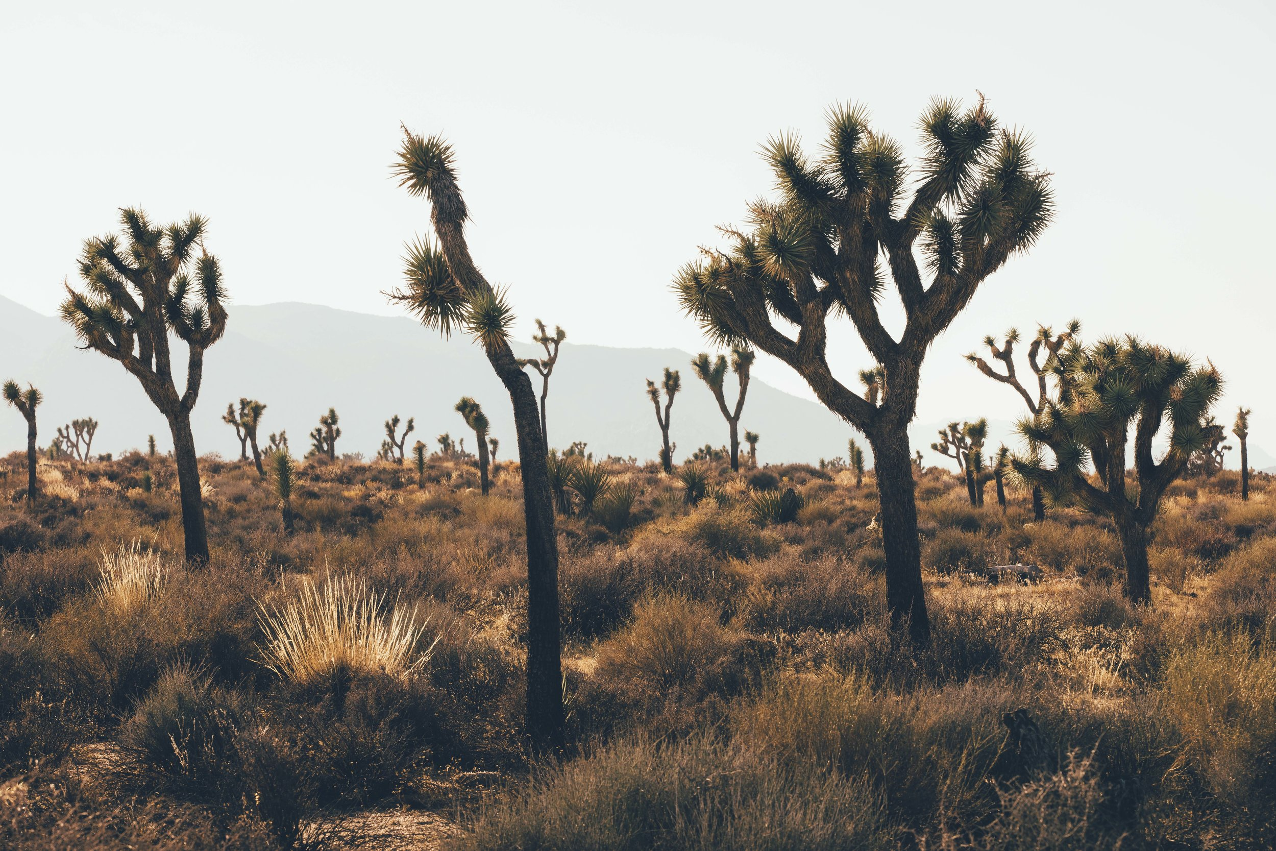 Joshua Tree James Glacier Photography 2018-15.jpg