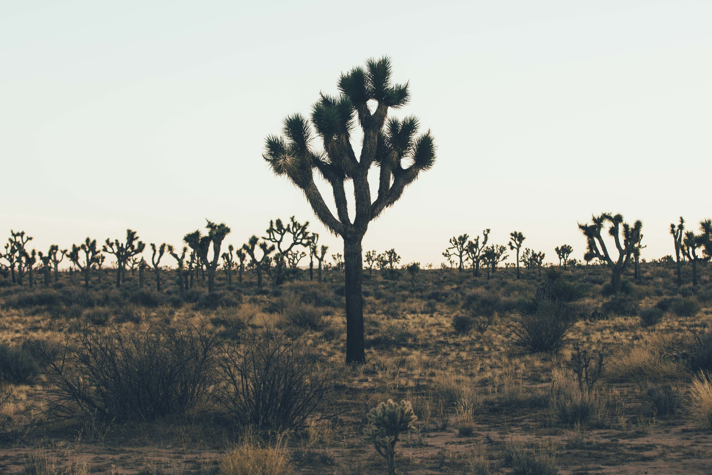 Joshua Tree James Glacier Photography 2018-18.jpg