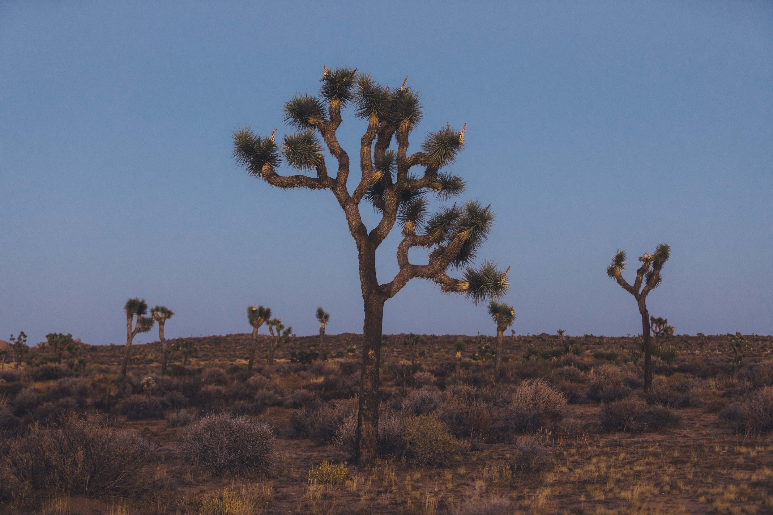 Joshua Tree James Glacier Photography 2018-21.jpg
