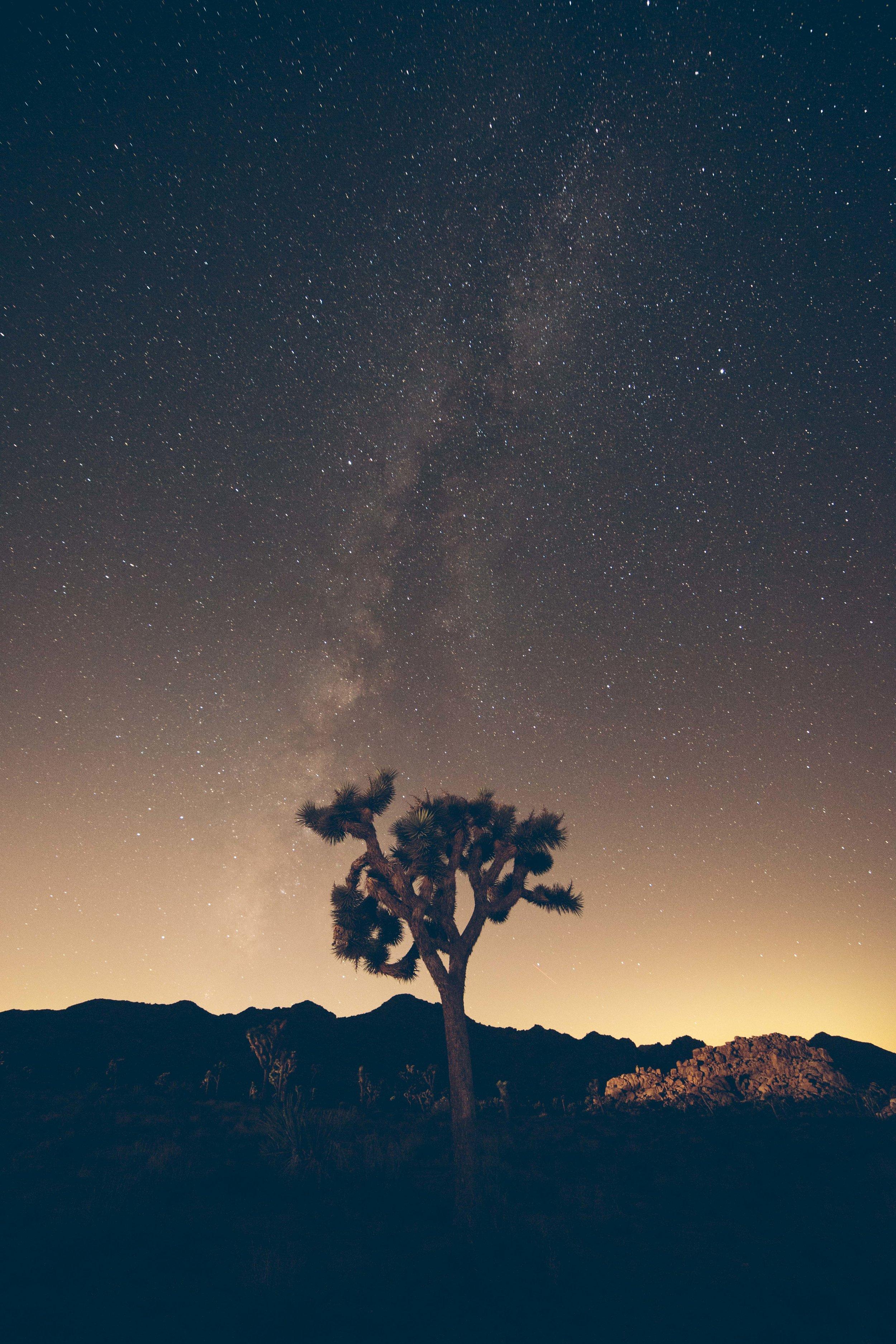 Joshua Tree James Glacier Photography 2018-24.jpg