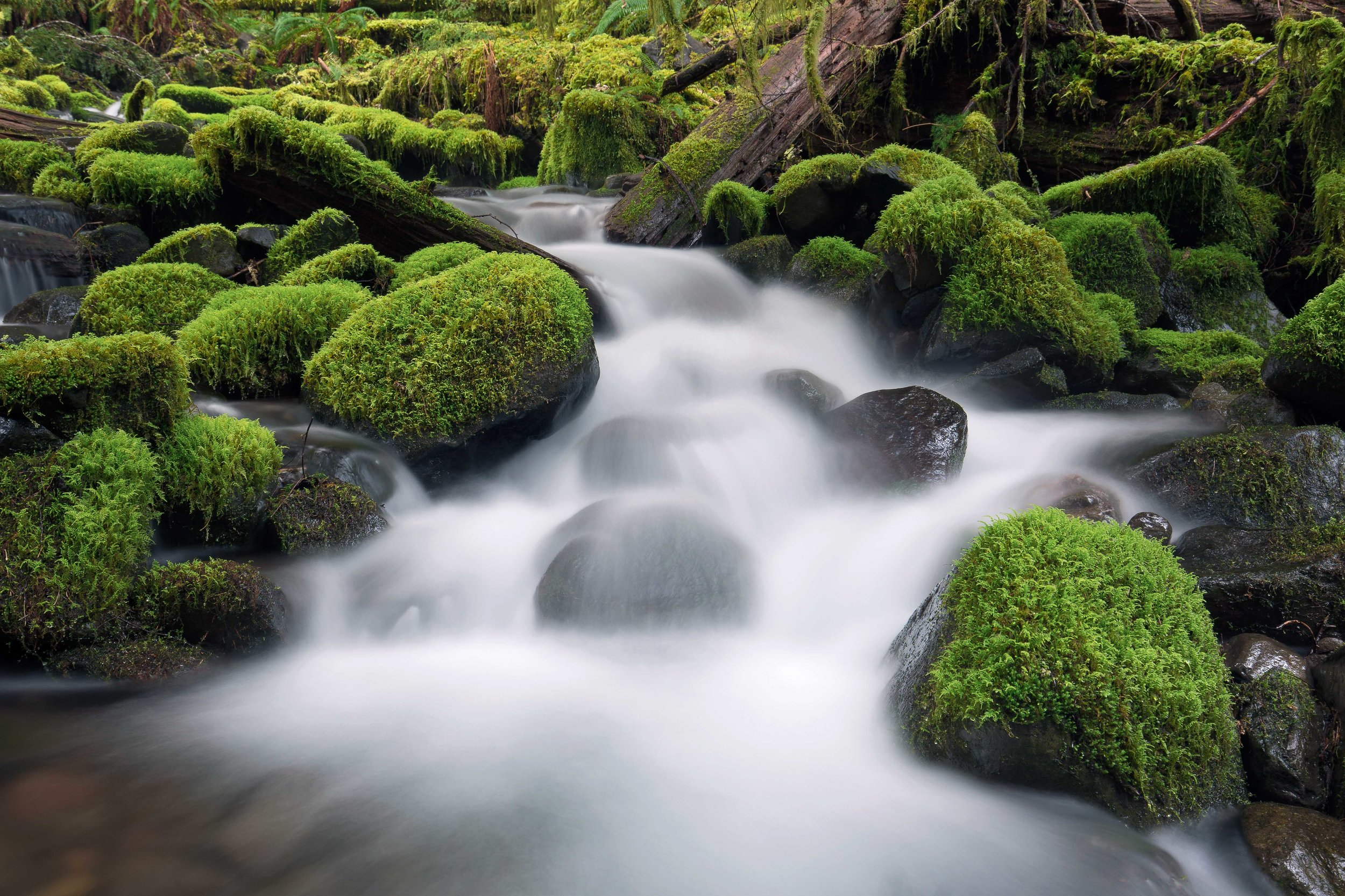 olympic national park landscape photography-3.jpg