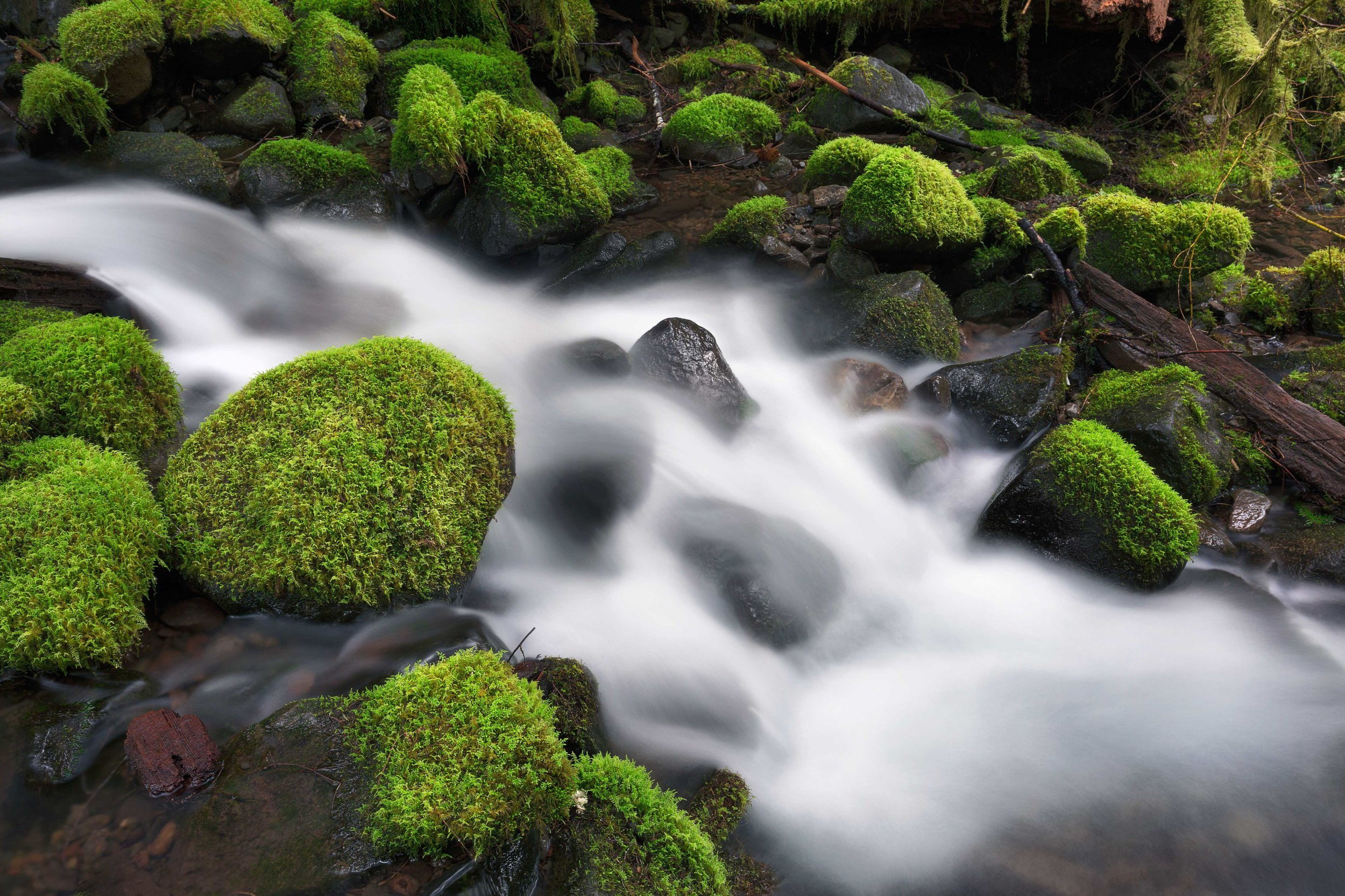 olympic national park landscape photography-4.jpg