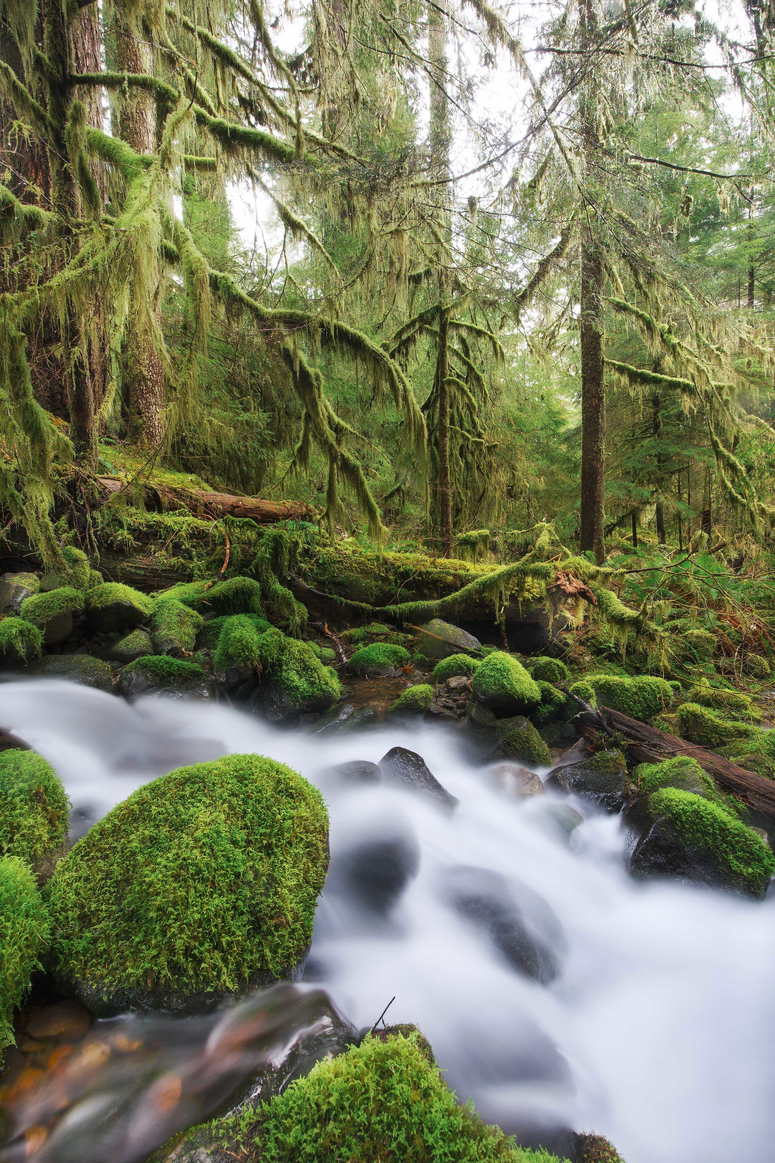 olympic national park landscape photography-5.jpg