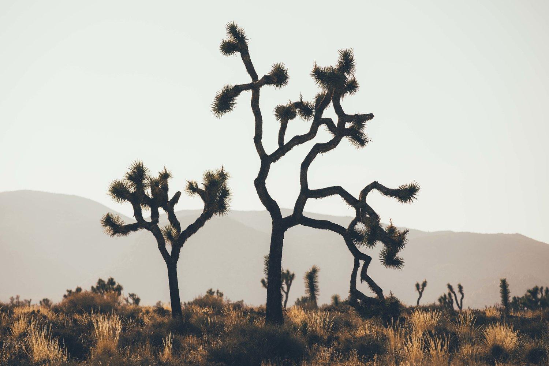 Joshua+Tree+James+Glacier+Photography+2018-4.jpg