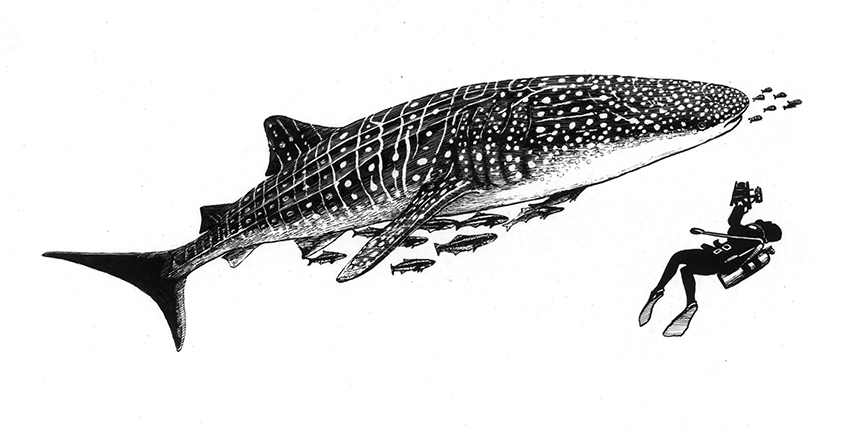 Whale Shark w/ Commensals