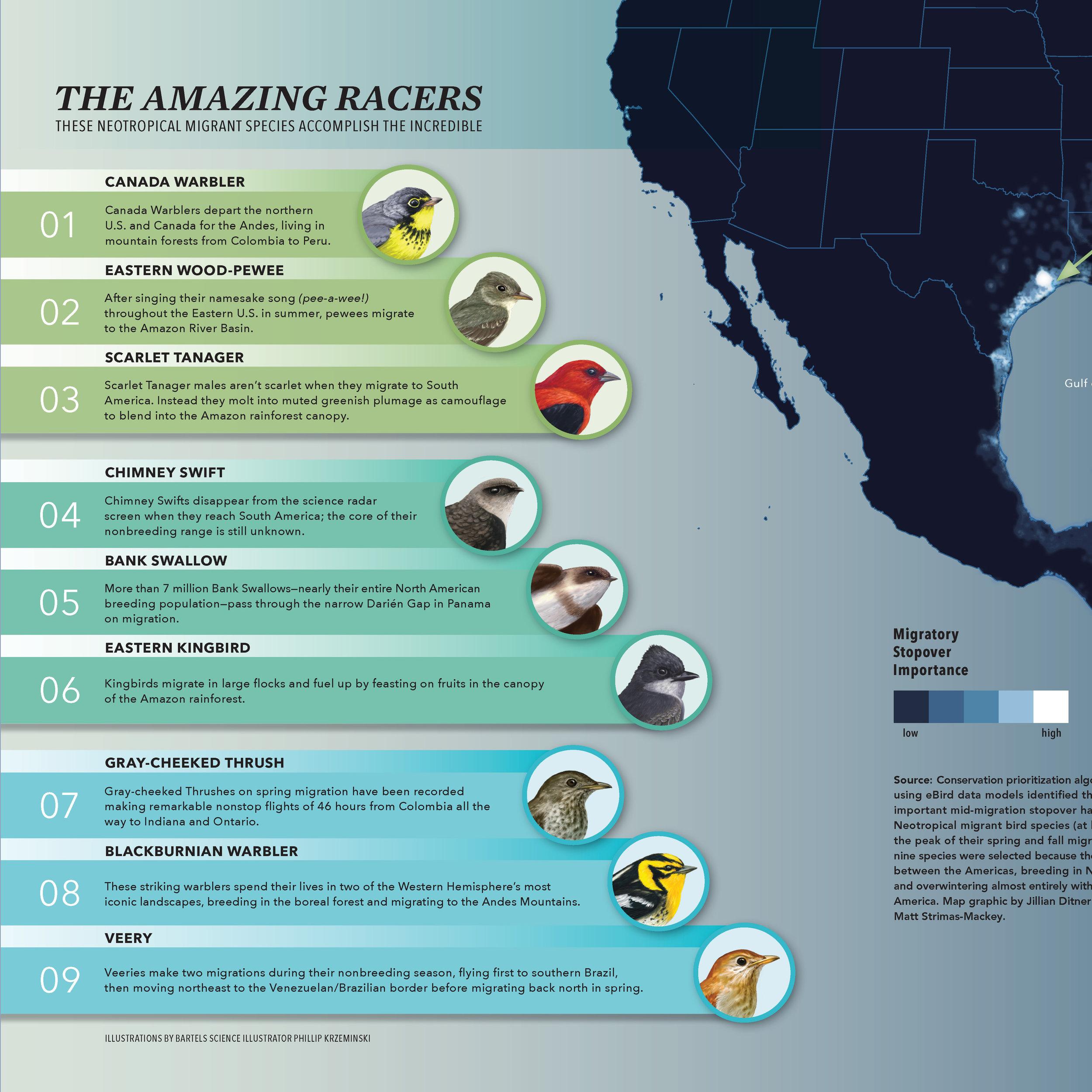 Amazing Racers