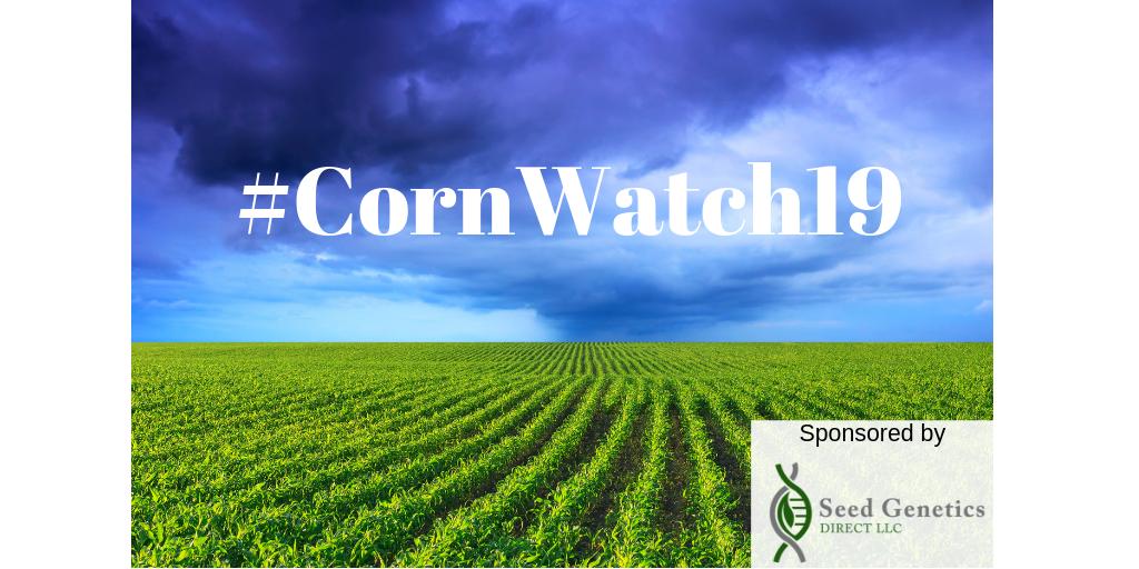 Corn Watch 19.png