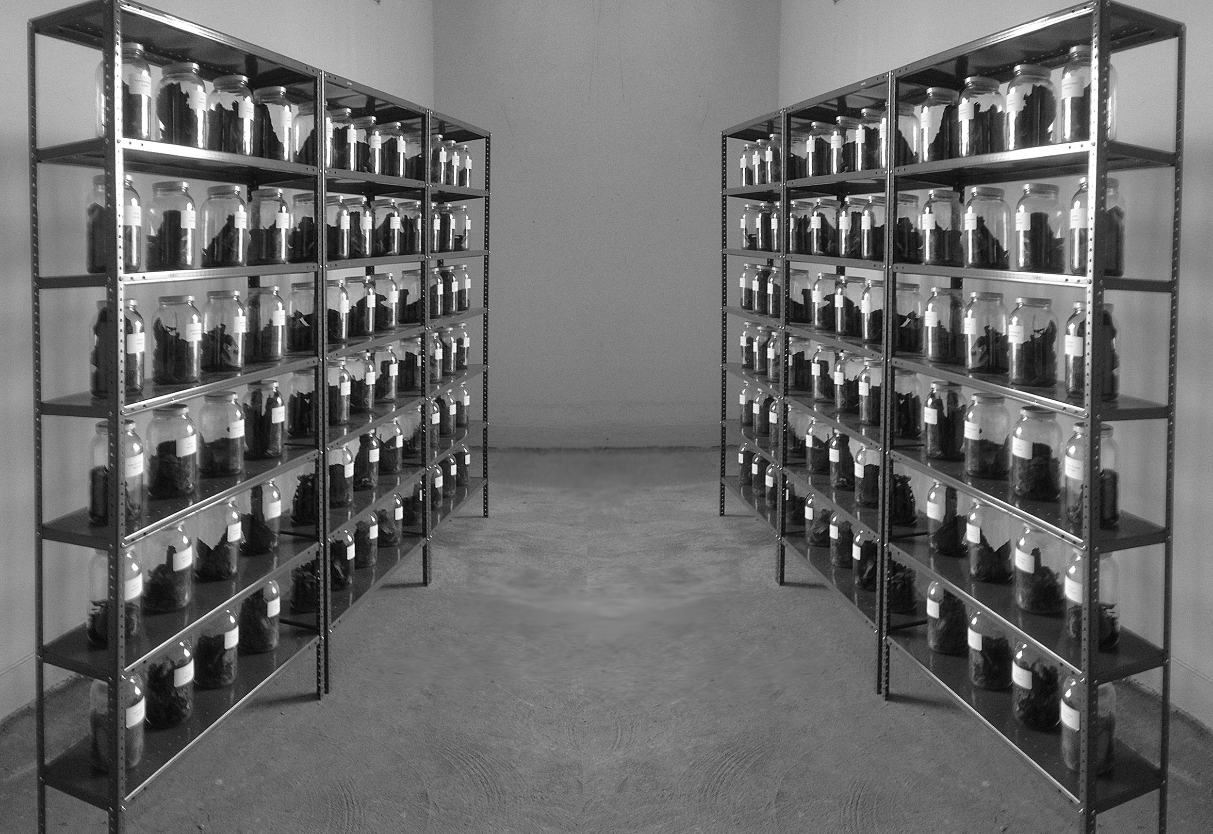 higher res shelving b&w.jpg