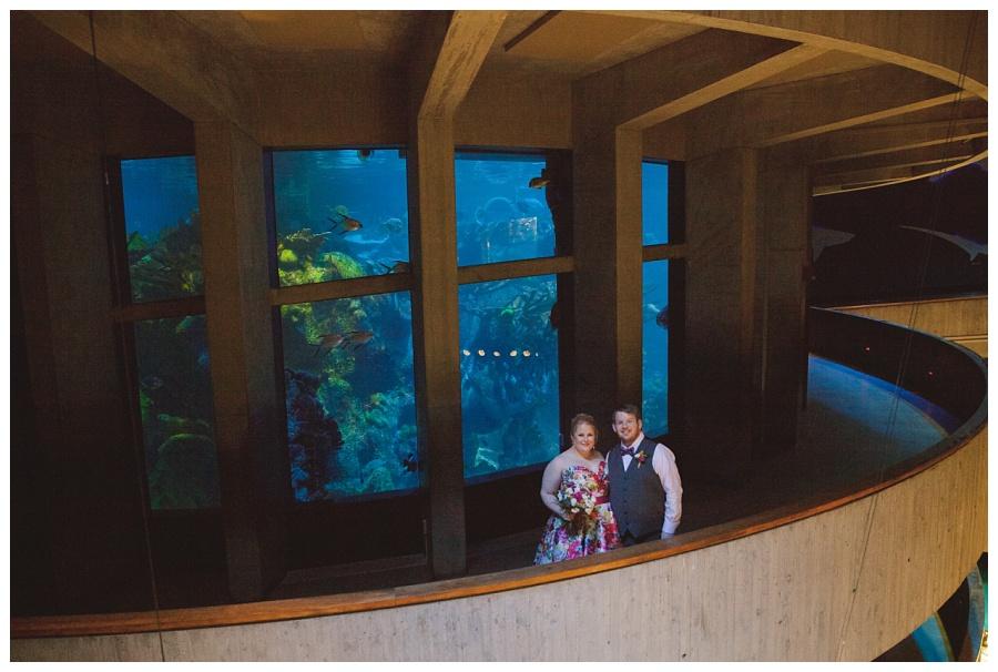 wedding photos with central tank new england aquarium