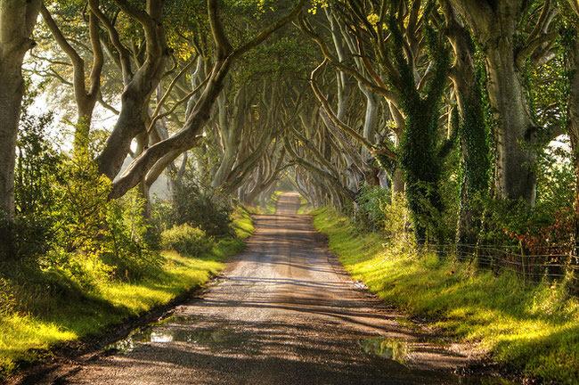 path with trees.jpg