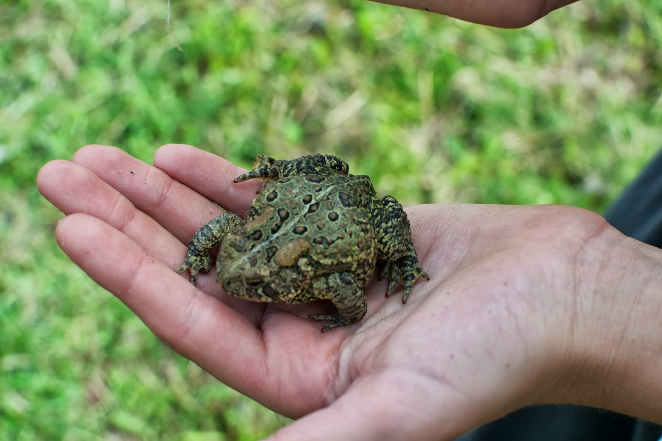our frog friend.jpg